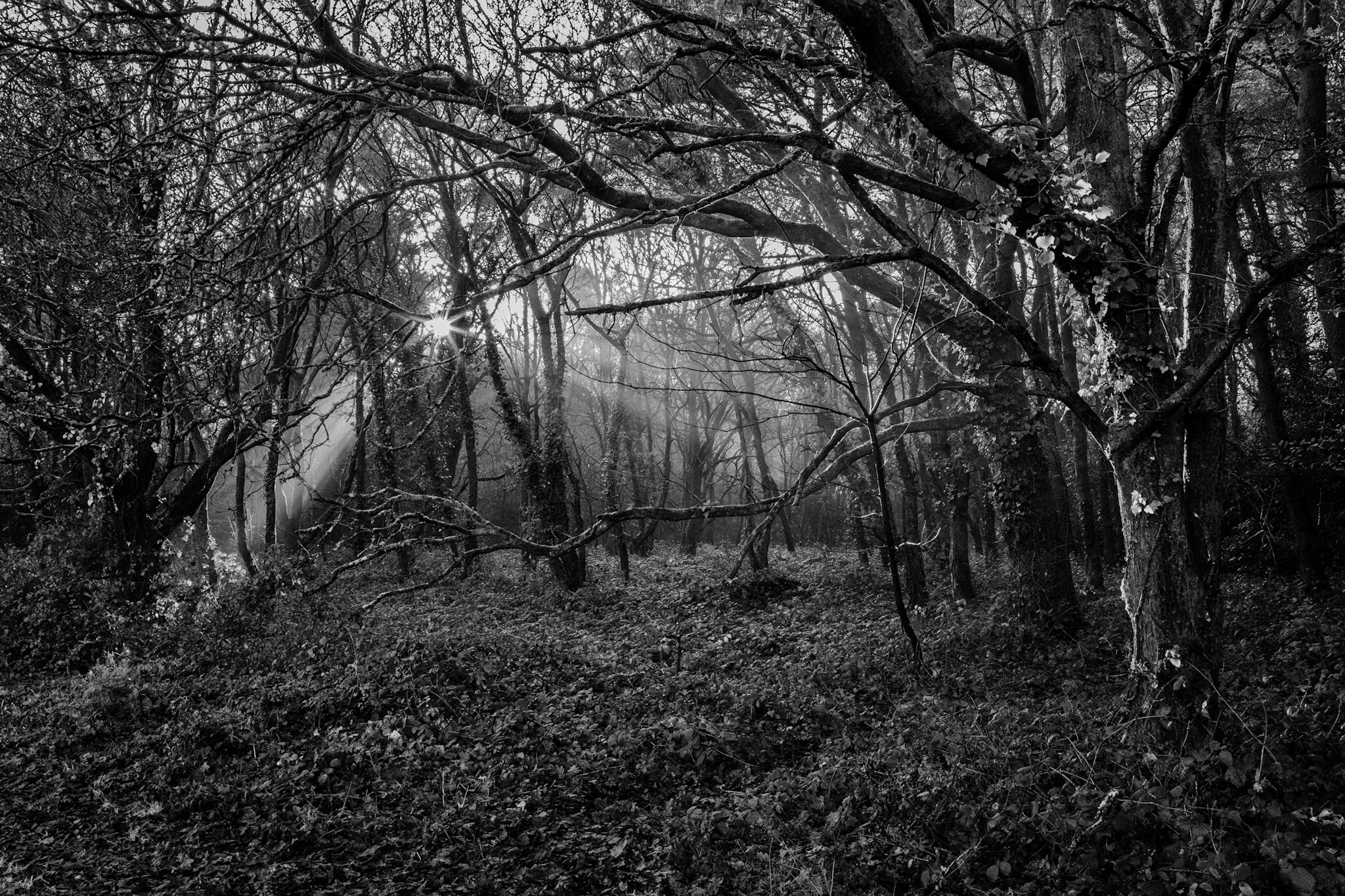 Delph Woods by Rick McEvoy landscape photographer in Dorset