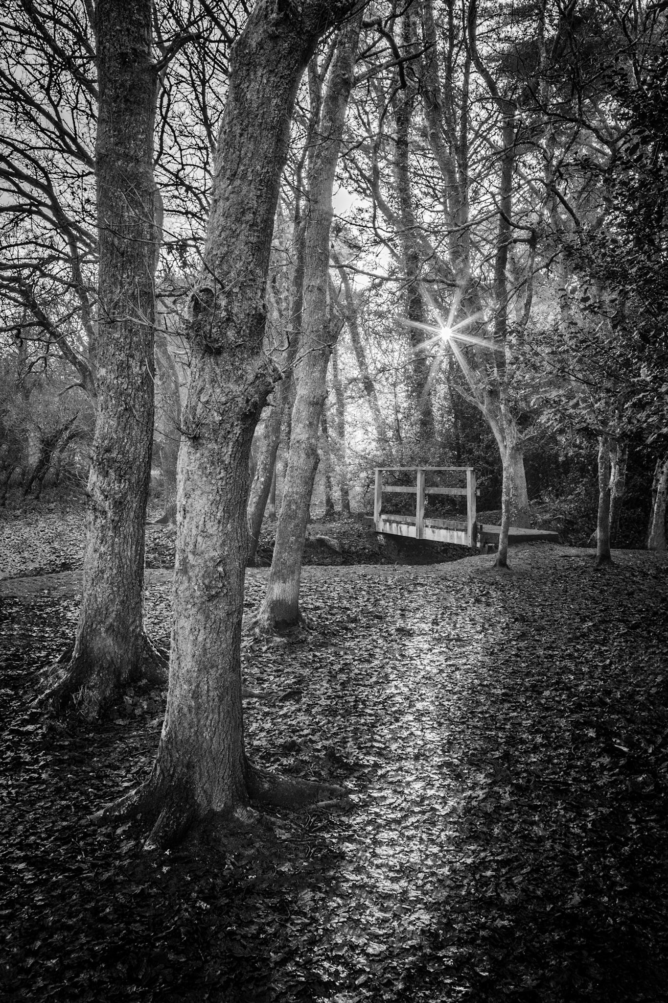 Delph Woods - black and white landscape photography in Dorset