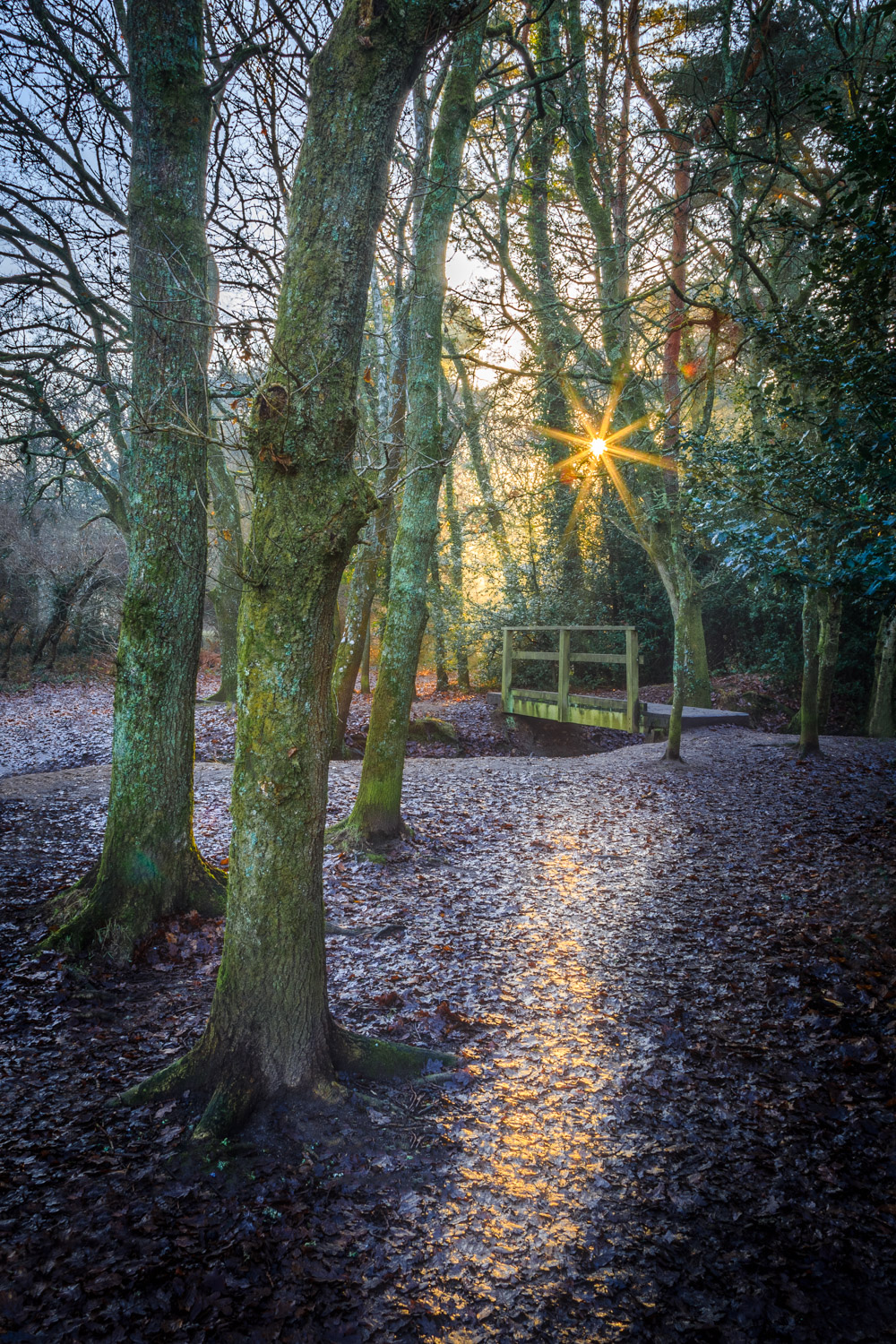 Delph Woods by Rick McEvoy photographer in Poole