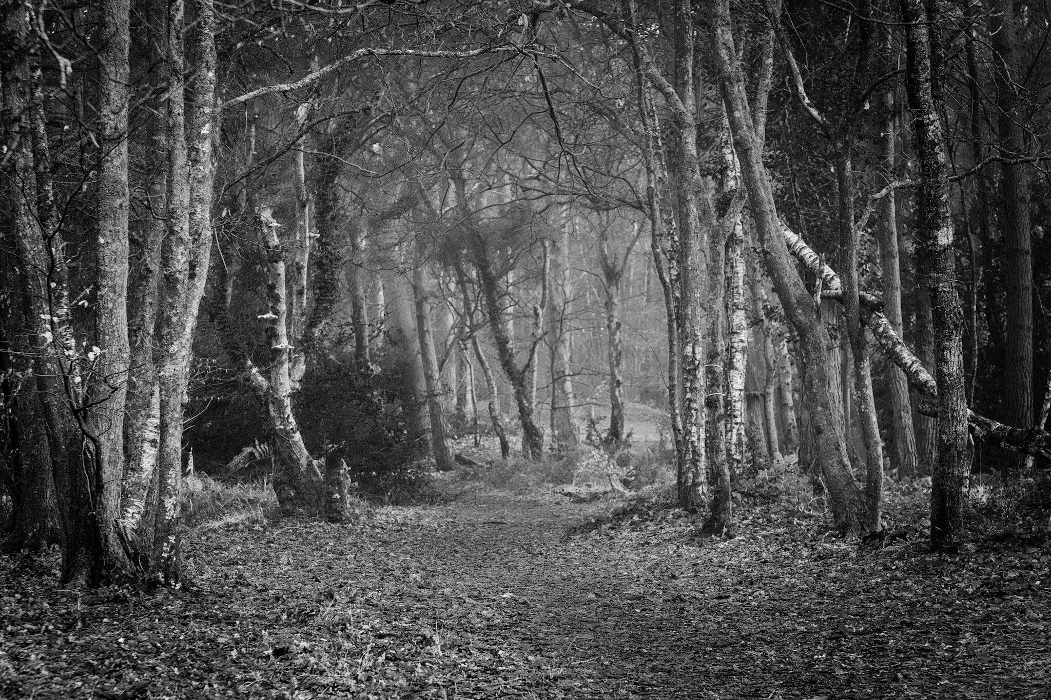 Landscape photography in Dorset by Rick McEvoy