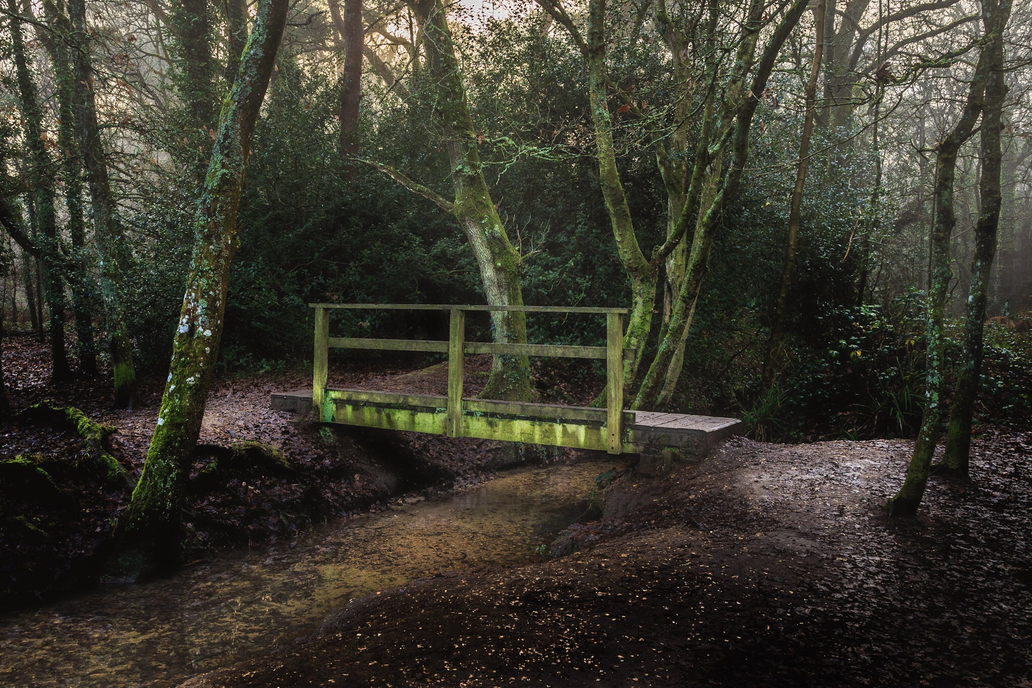 Picture of the bridge in the woods in Poole, Dorset