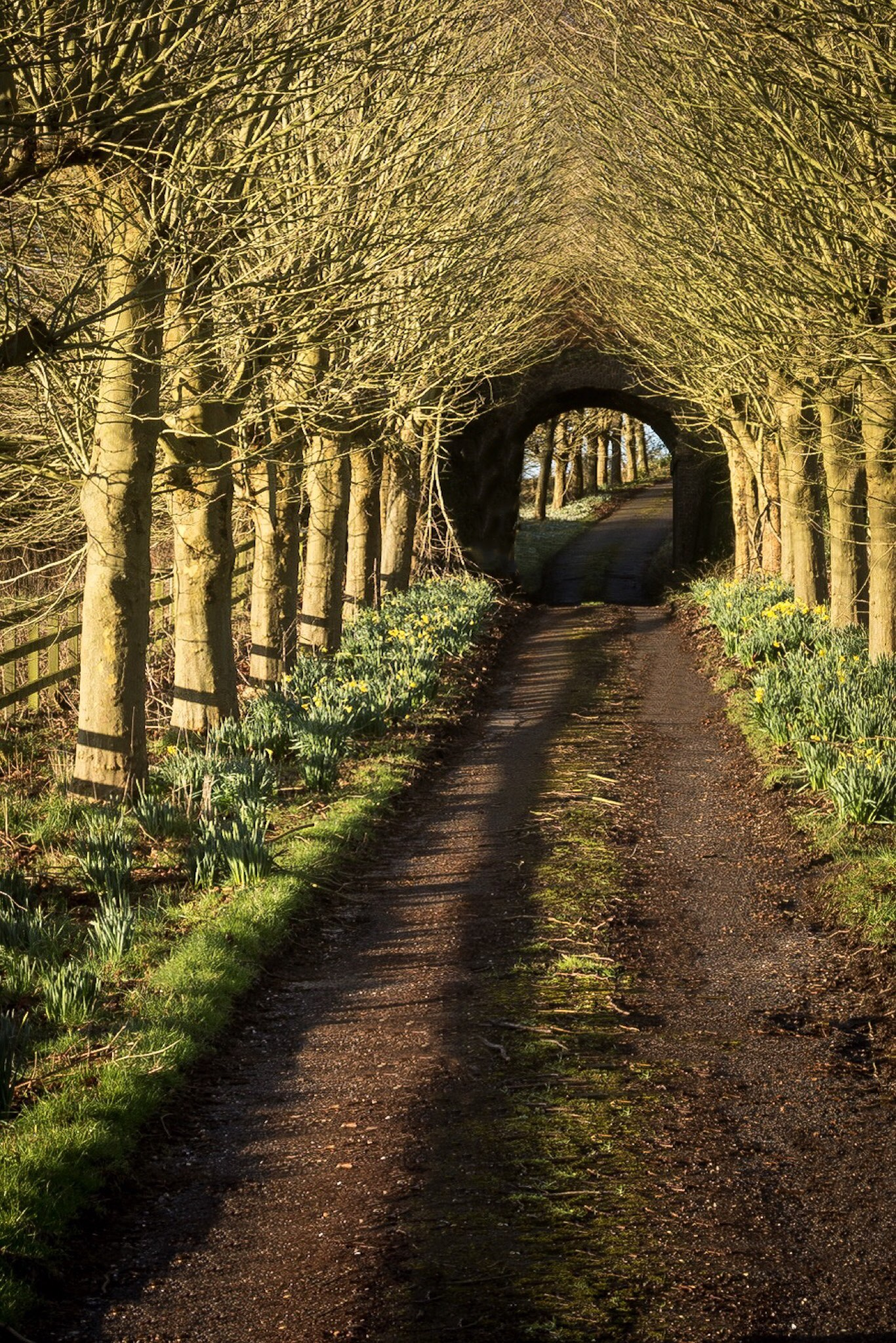 Road and tunnel by Rick McEvoy Dorset Photographer