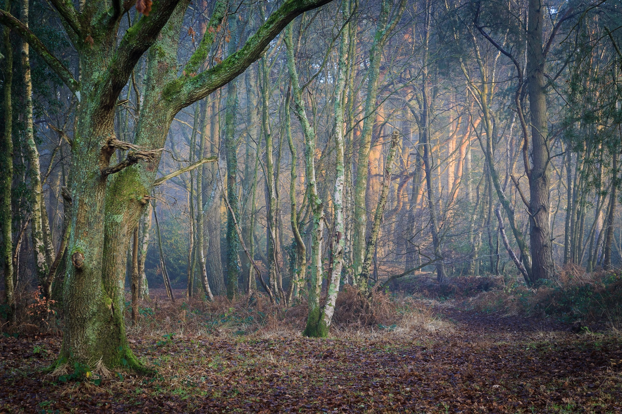Woods in Poole by Rick McEvoy - Dorset Photographer