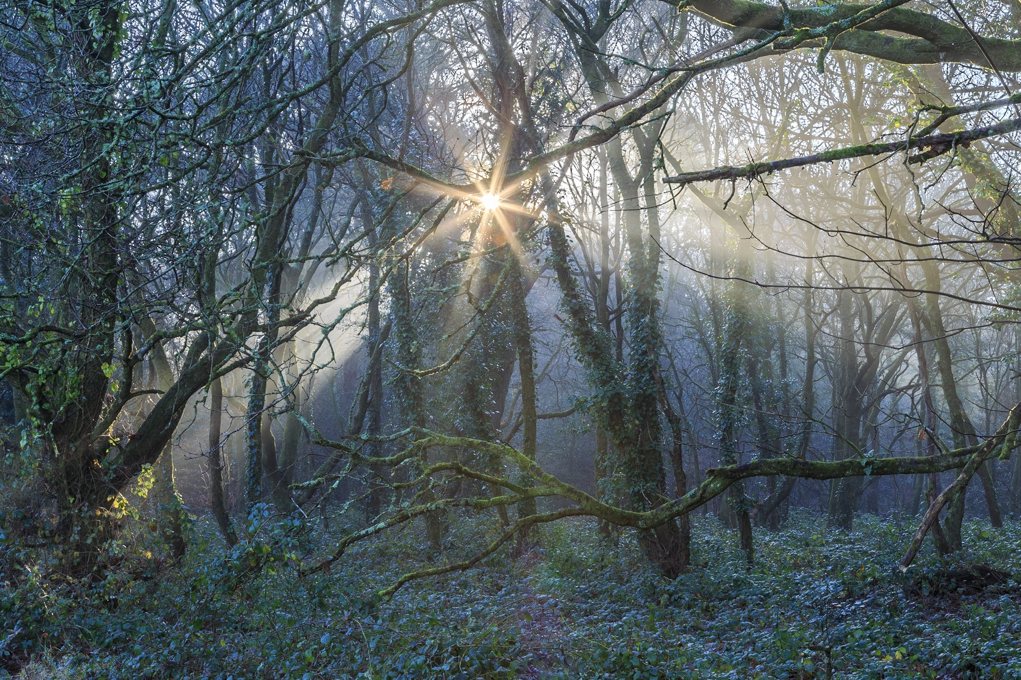 The original composition of the picture of the sun in the woods in Poole.