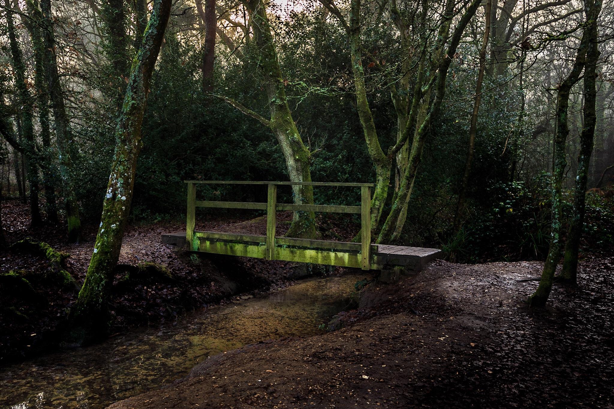 Footbridge in the woods - the original composition