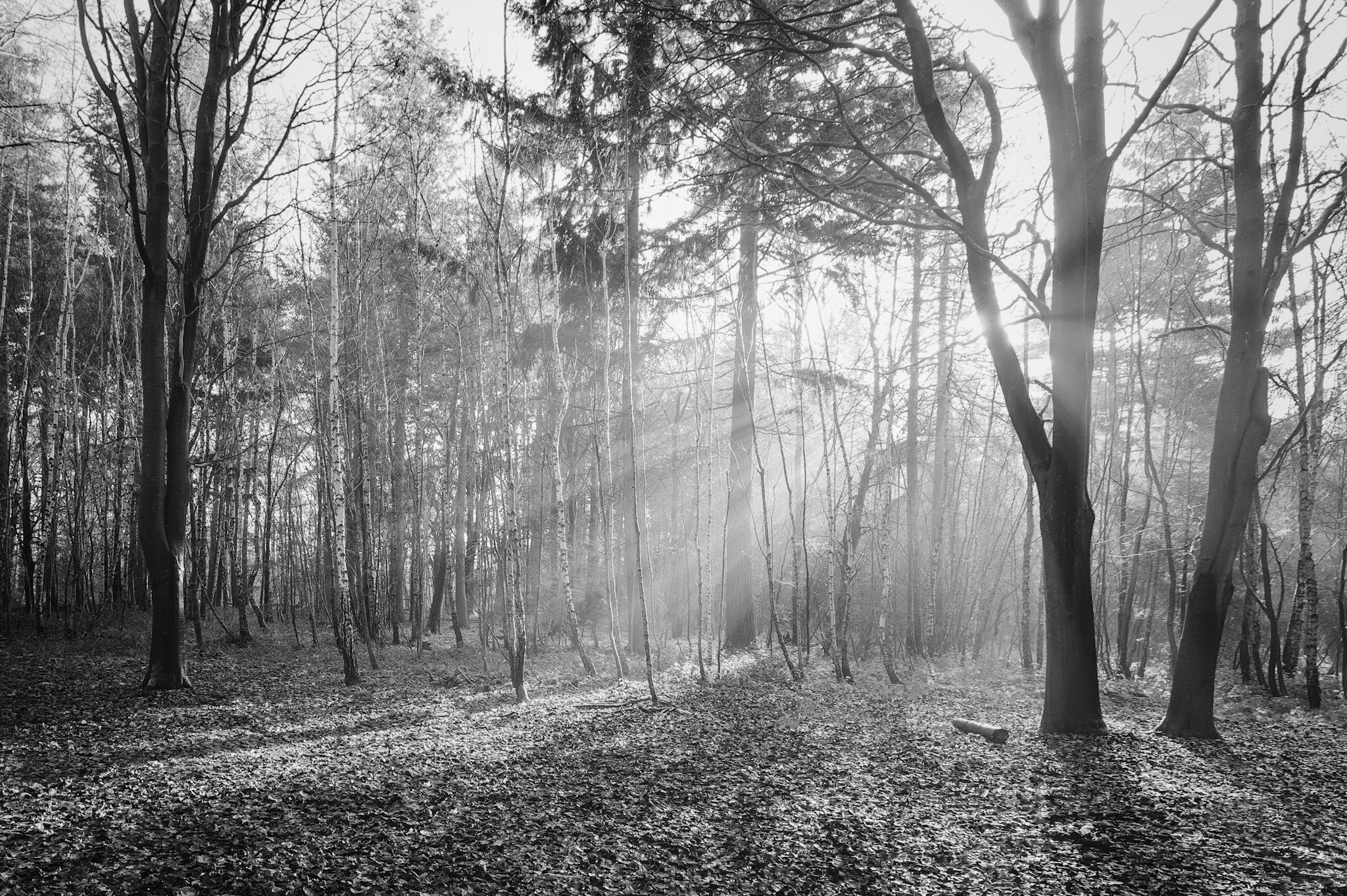 The woods at The Vyne - landscape photography in Hampshire by Rick McEvoy