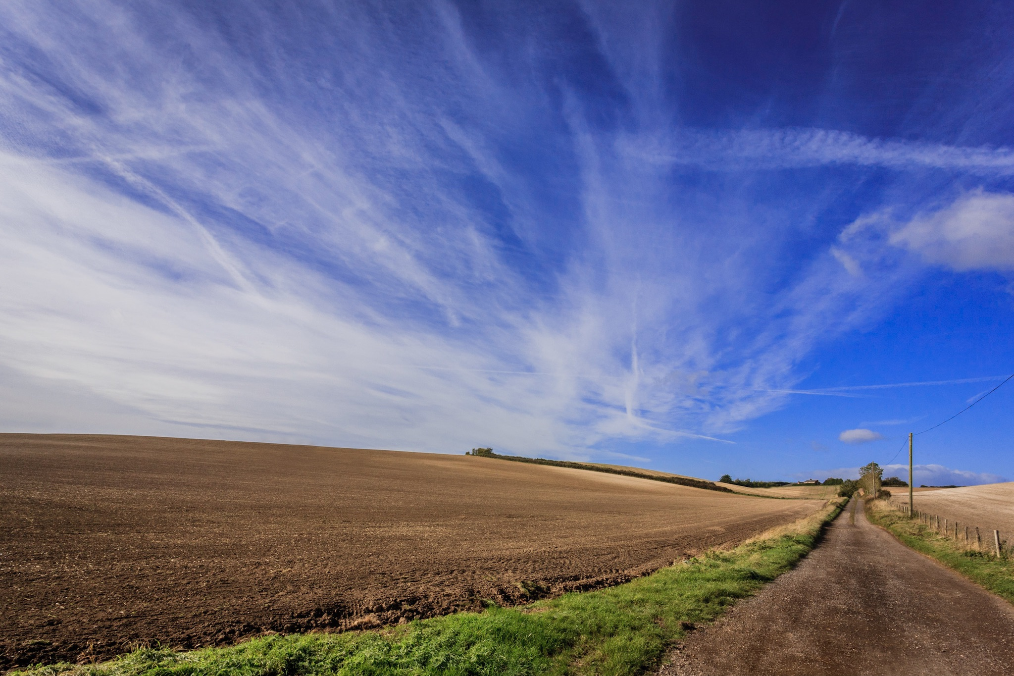 A field near Bere Regis by Rick McEvoy landscape photographer in Dorset