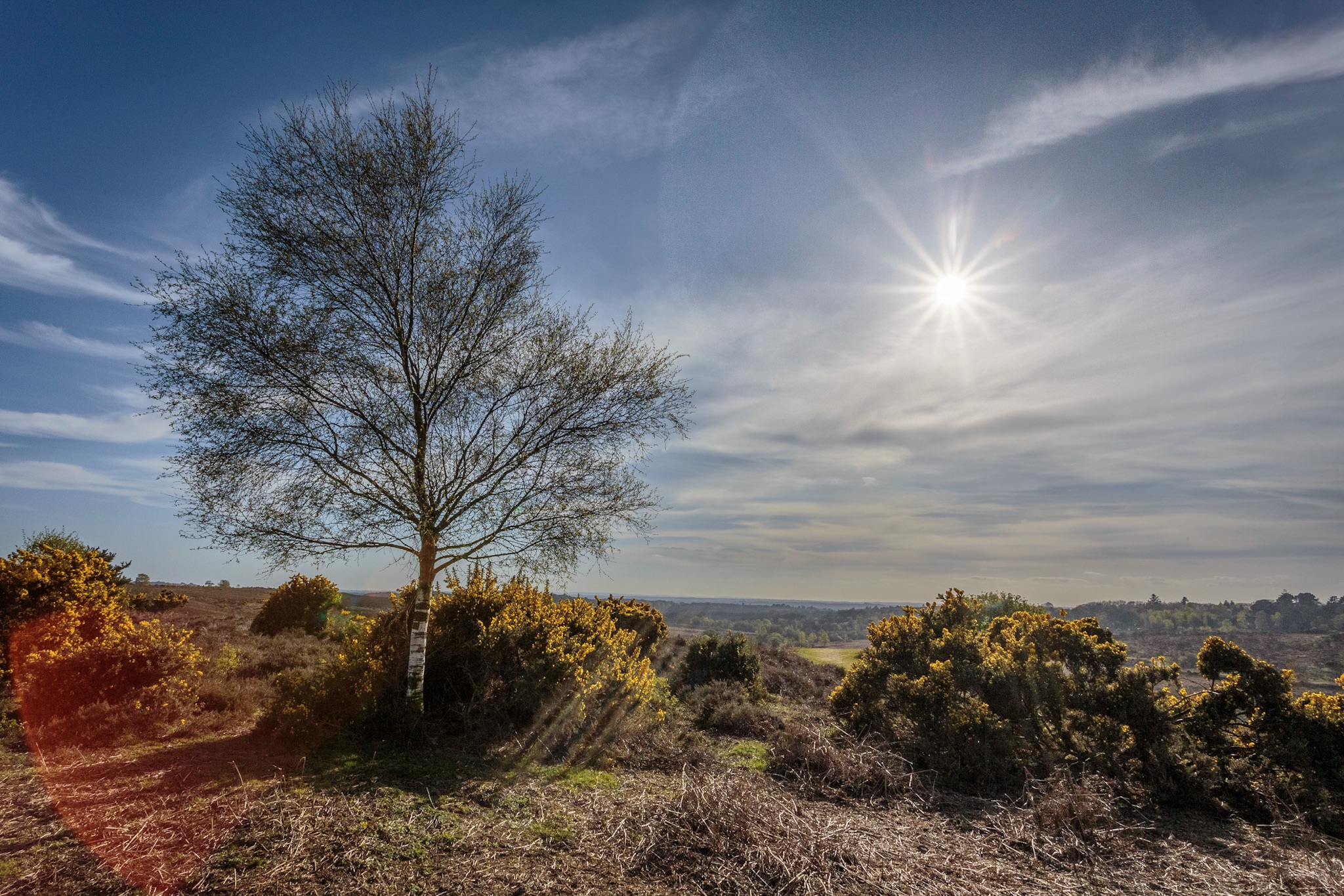 Picket Post in the New Forest by Rick McEvoy Hampshire Photographer