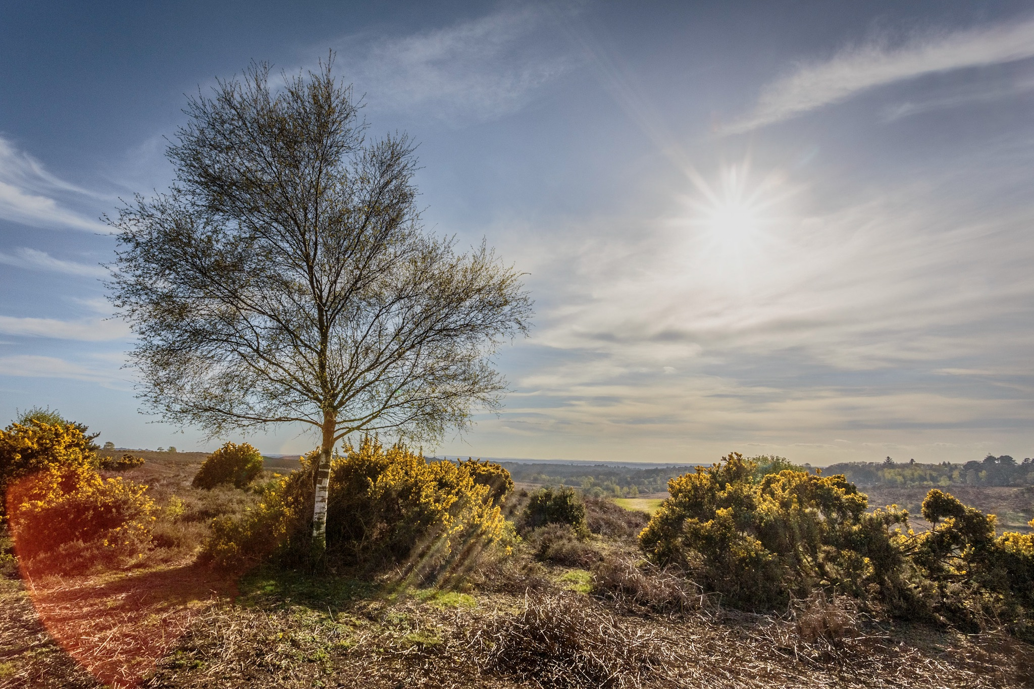 Landscape photography in Hampshire by Rick McEvoy