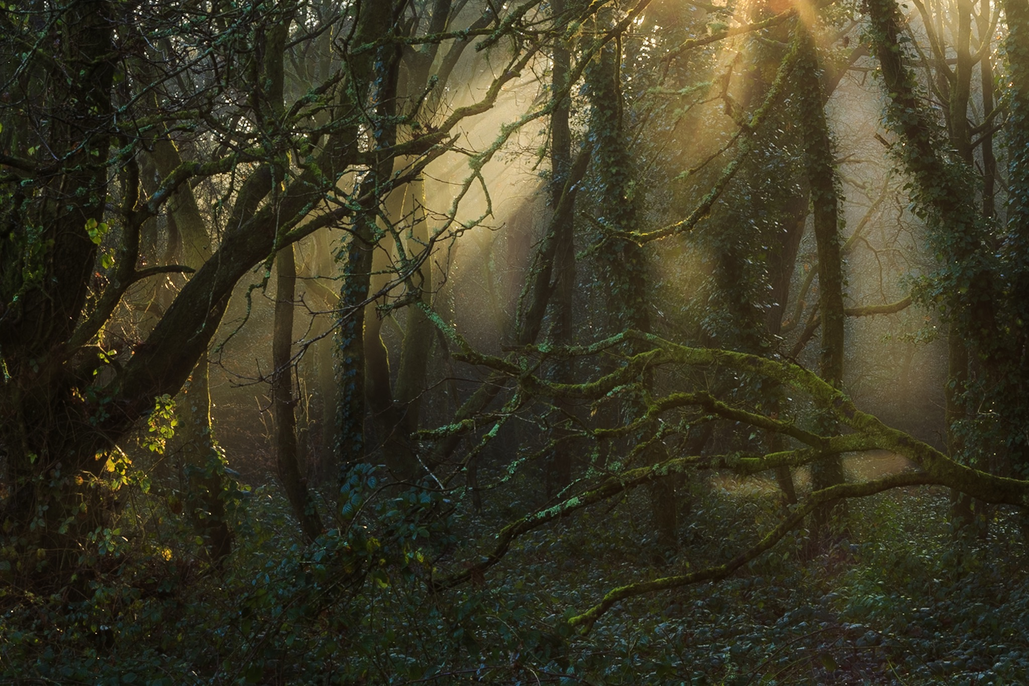 Picture of Delph Woods in Poole by Rick McEvoy landscape photographer in Dorset