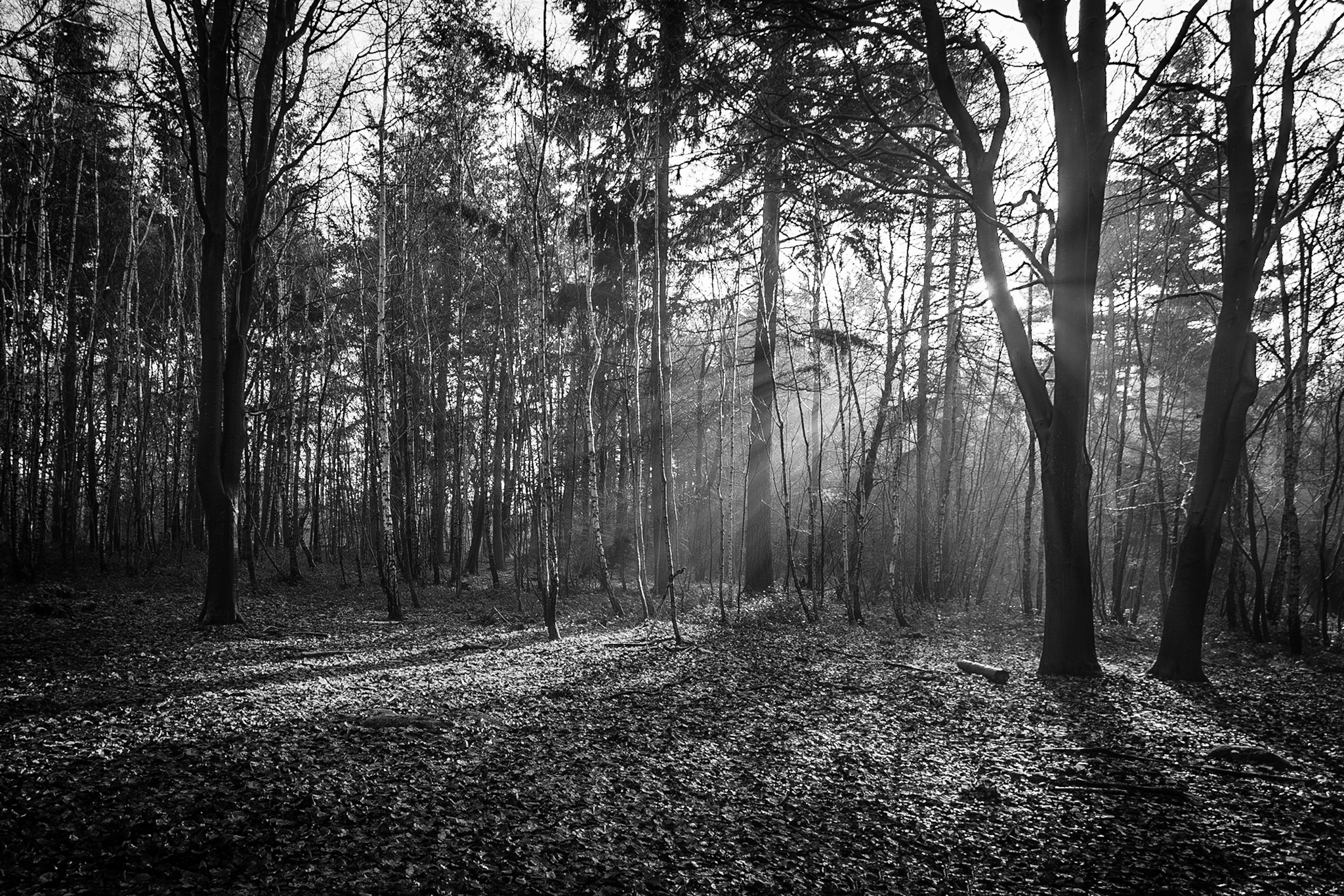 Black and white landscape photography in Dorset by Rick McEvoy