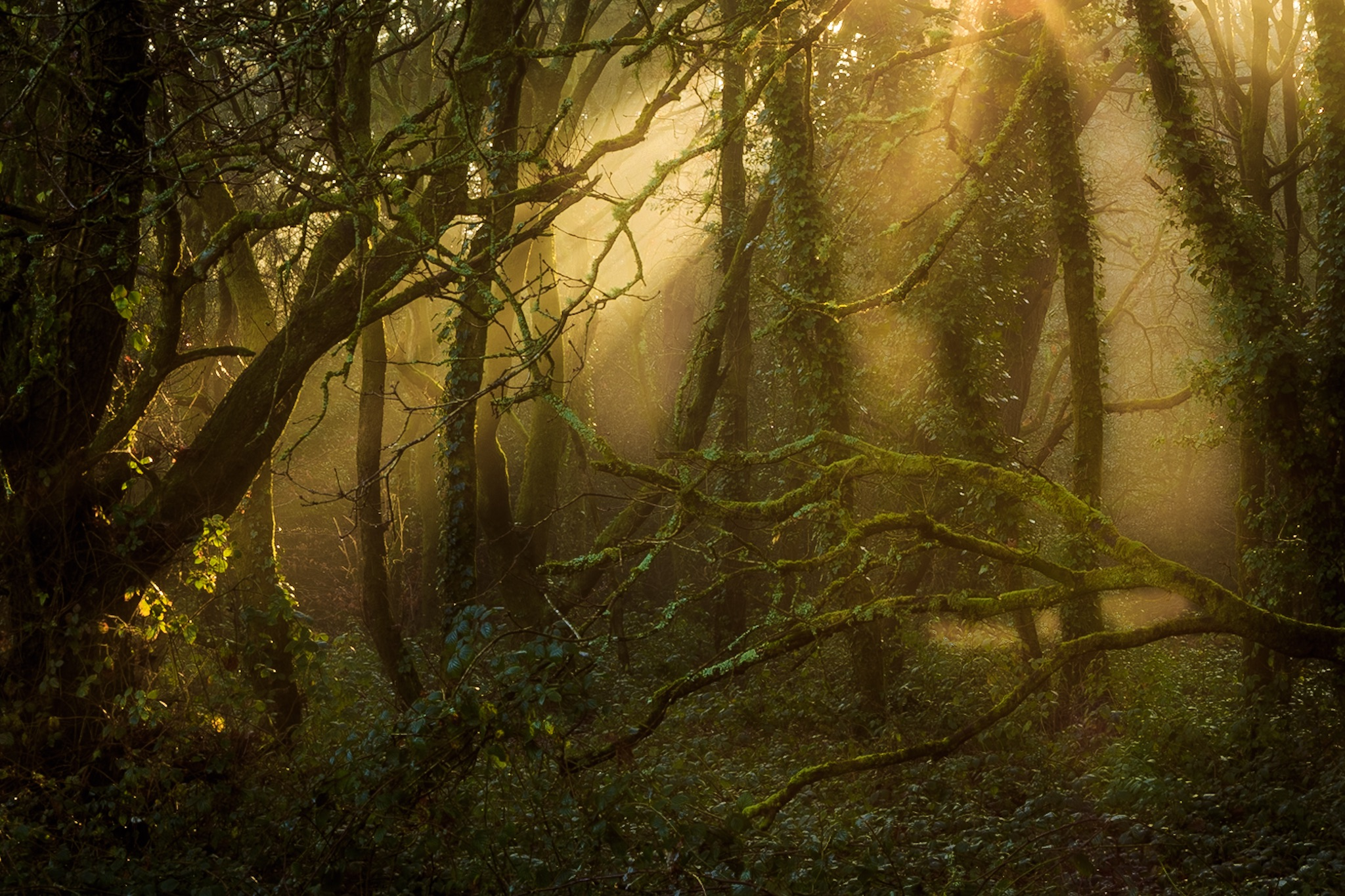Picture of the woods in Poole