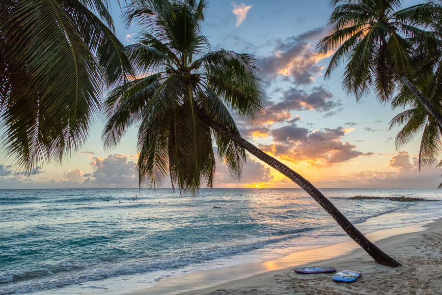 Palm trees and surf boards on Dover Beach