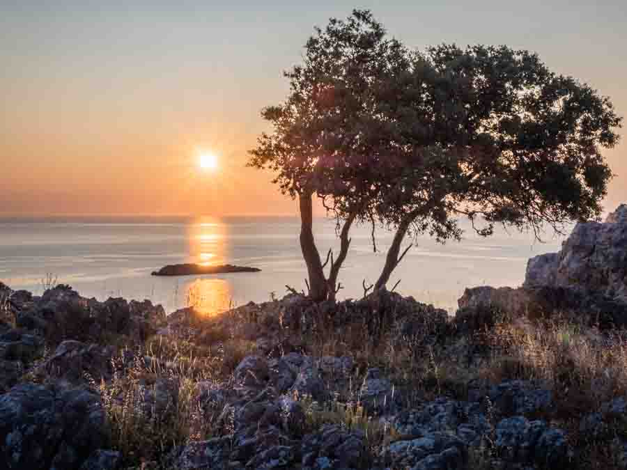 Tree at sunrise on Rhodes Greece