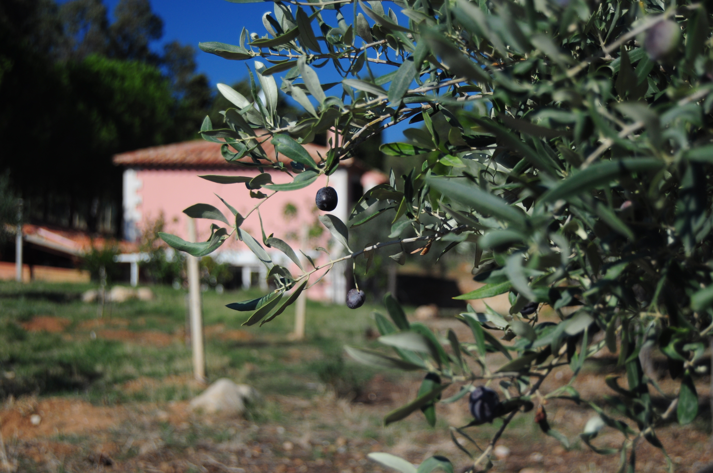 View from the Olive Groves