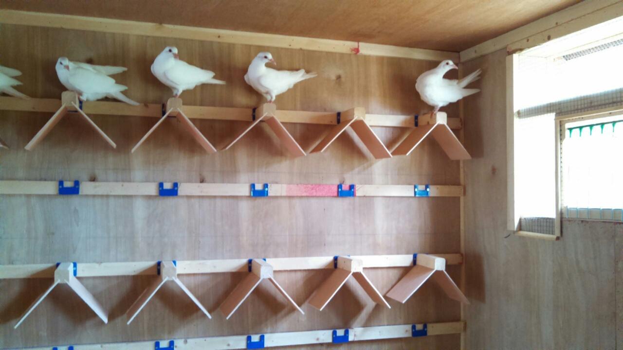 St_louis_doves_home.jpg
