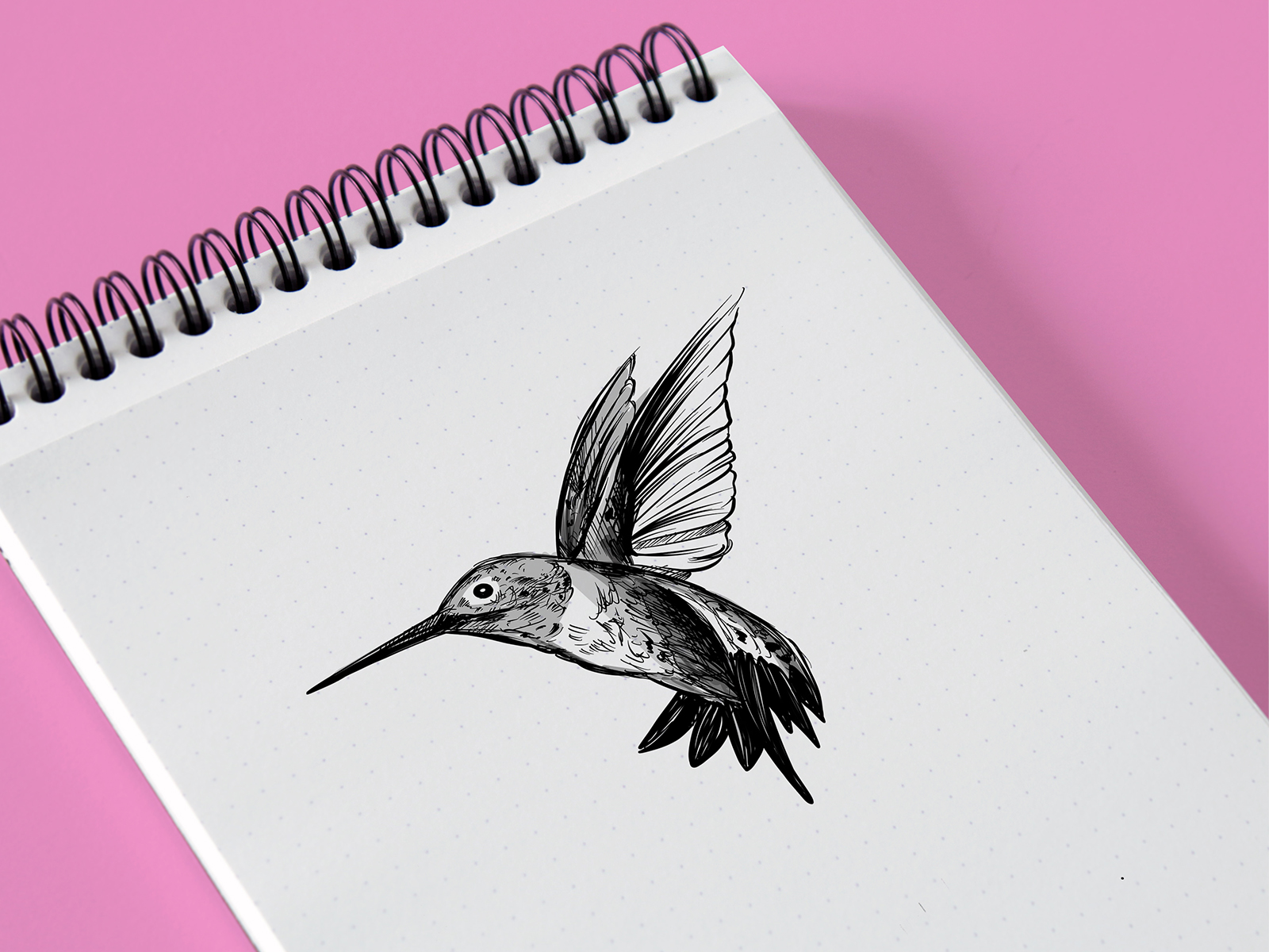 hummingbird colibri rajz1 .jpg
