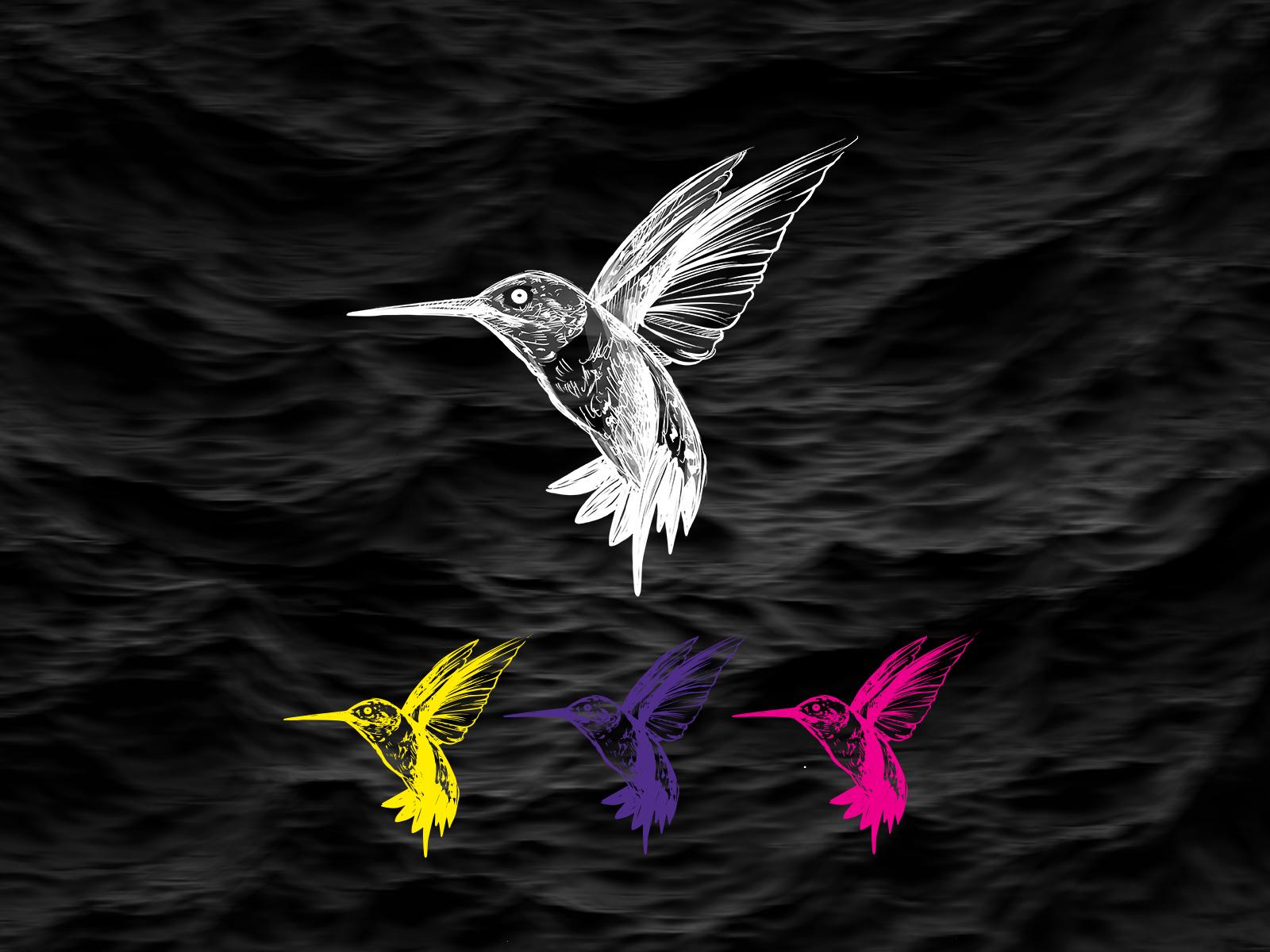hummingbird colibri szín variációk.jpg