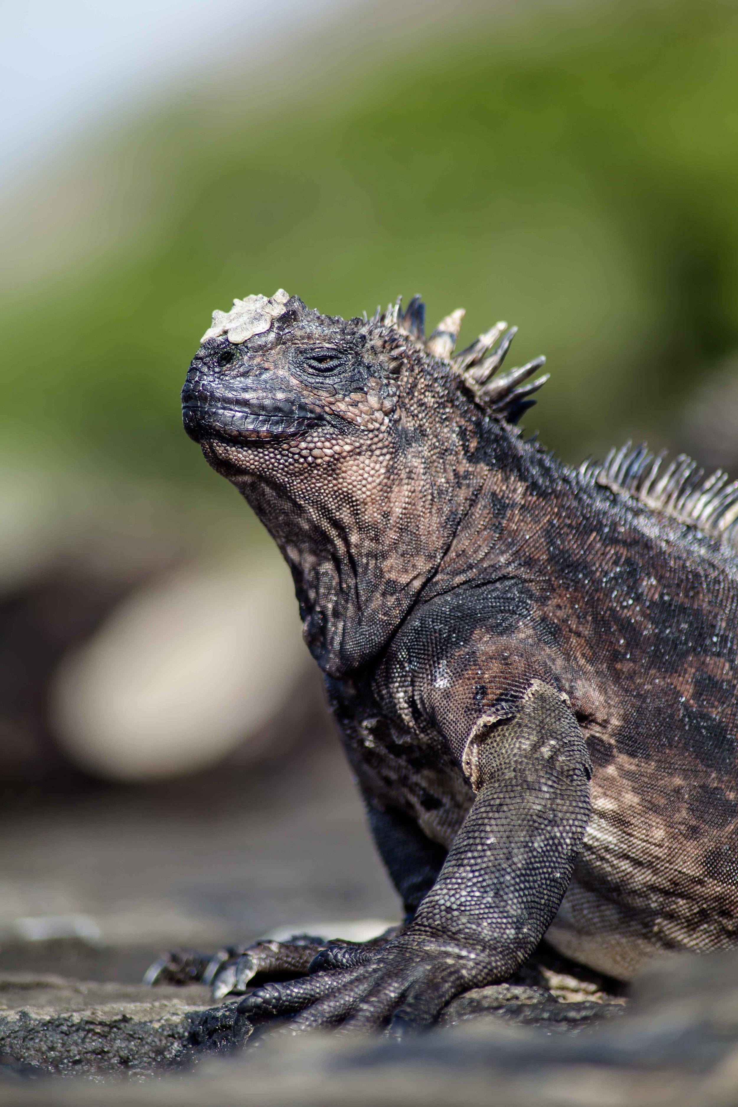 Galapagos_export-4.jpg