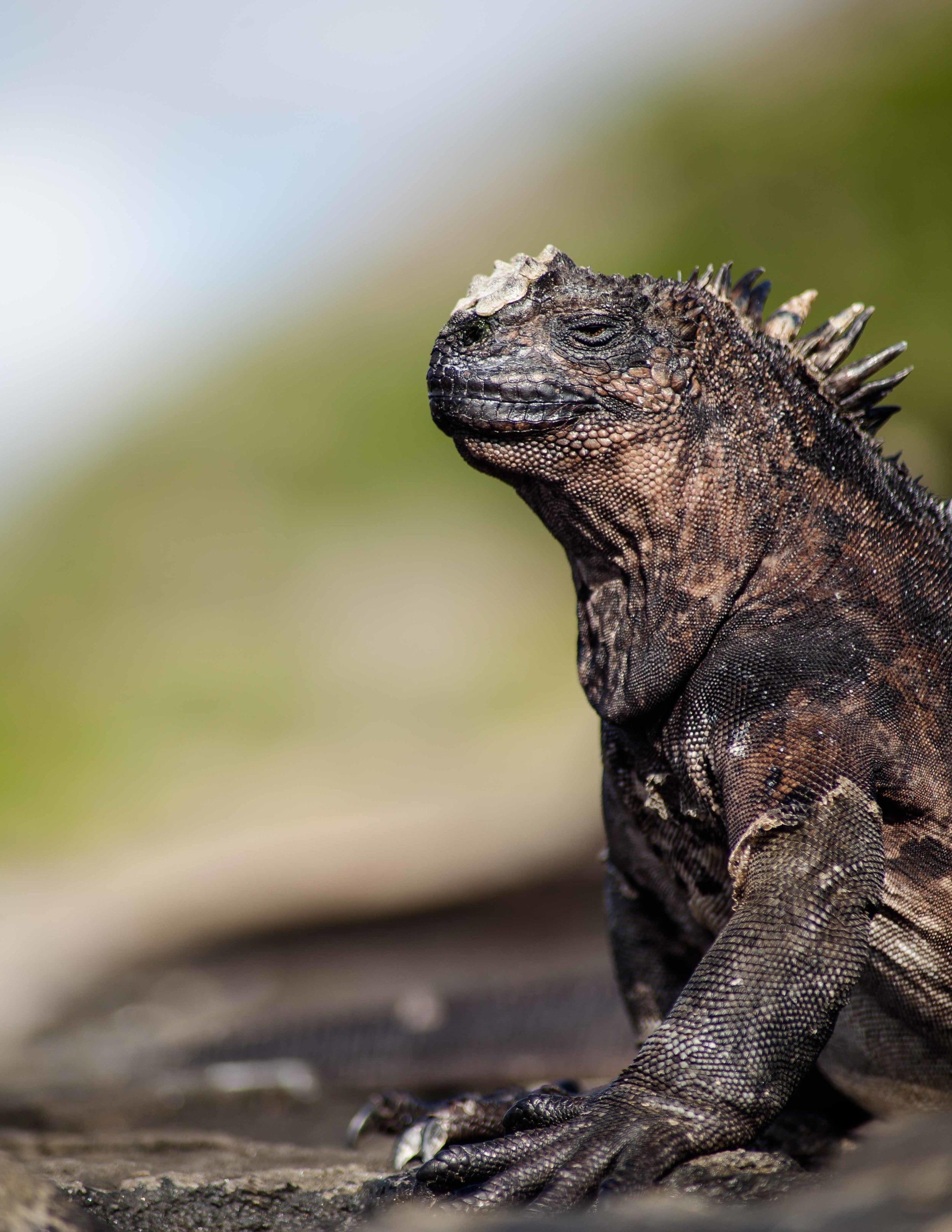 Galapagos_export-3.jpg