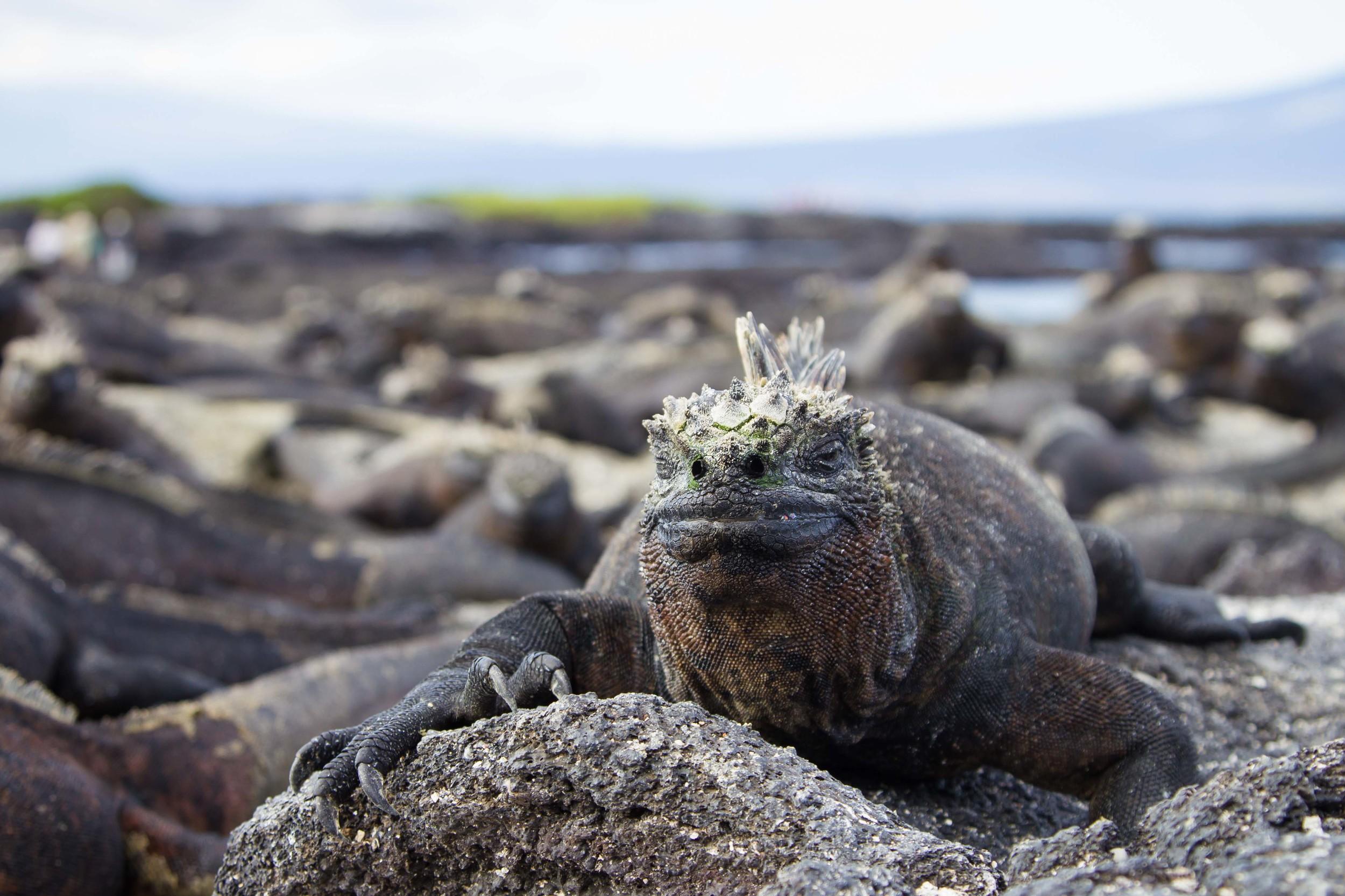 Galapagos_export-7.jpg