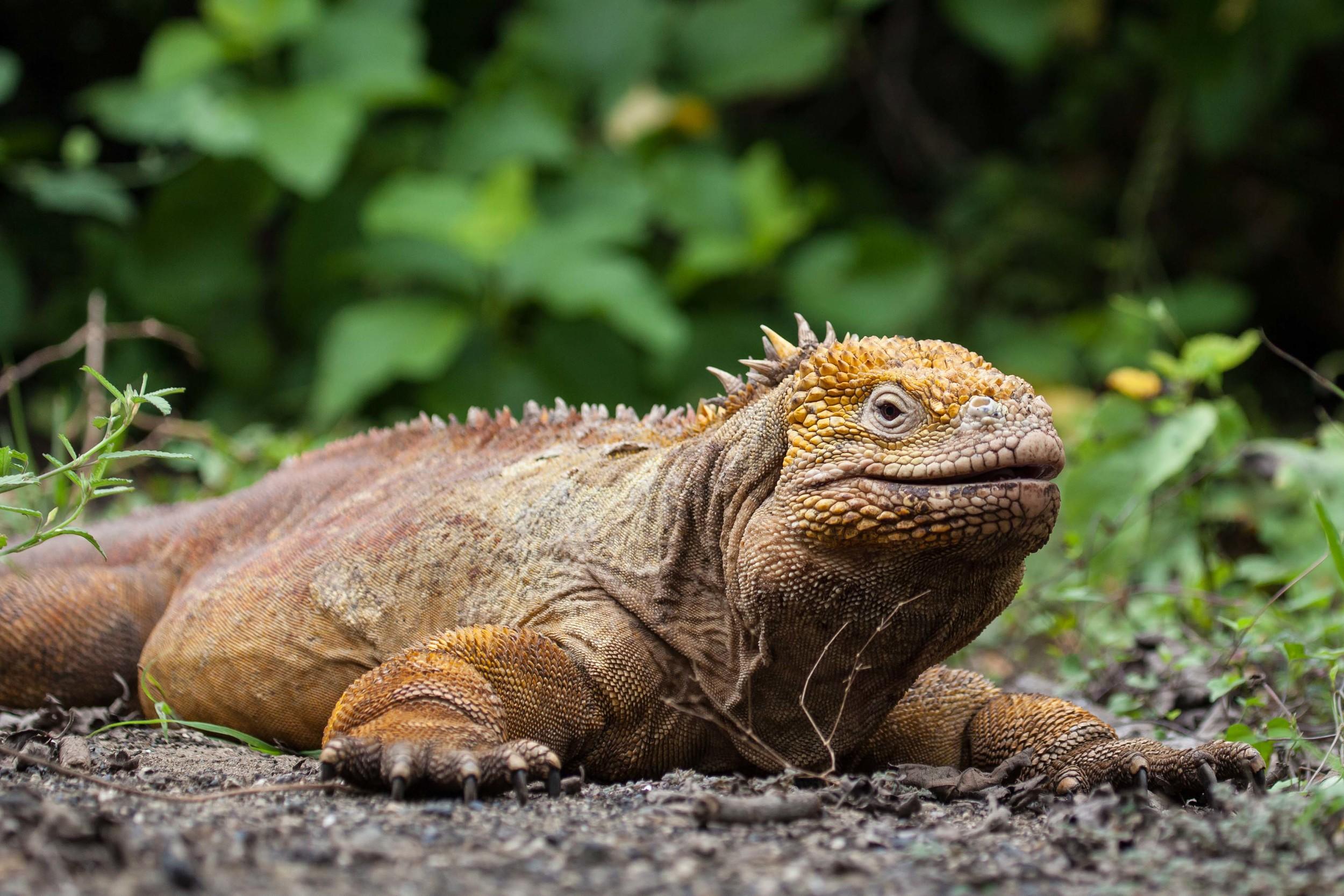 Galapagos_export-11.jpg