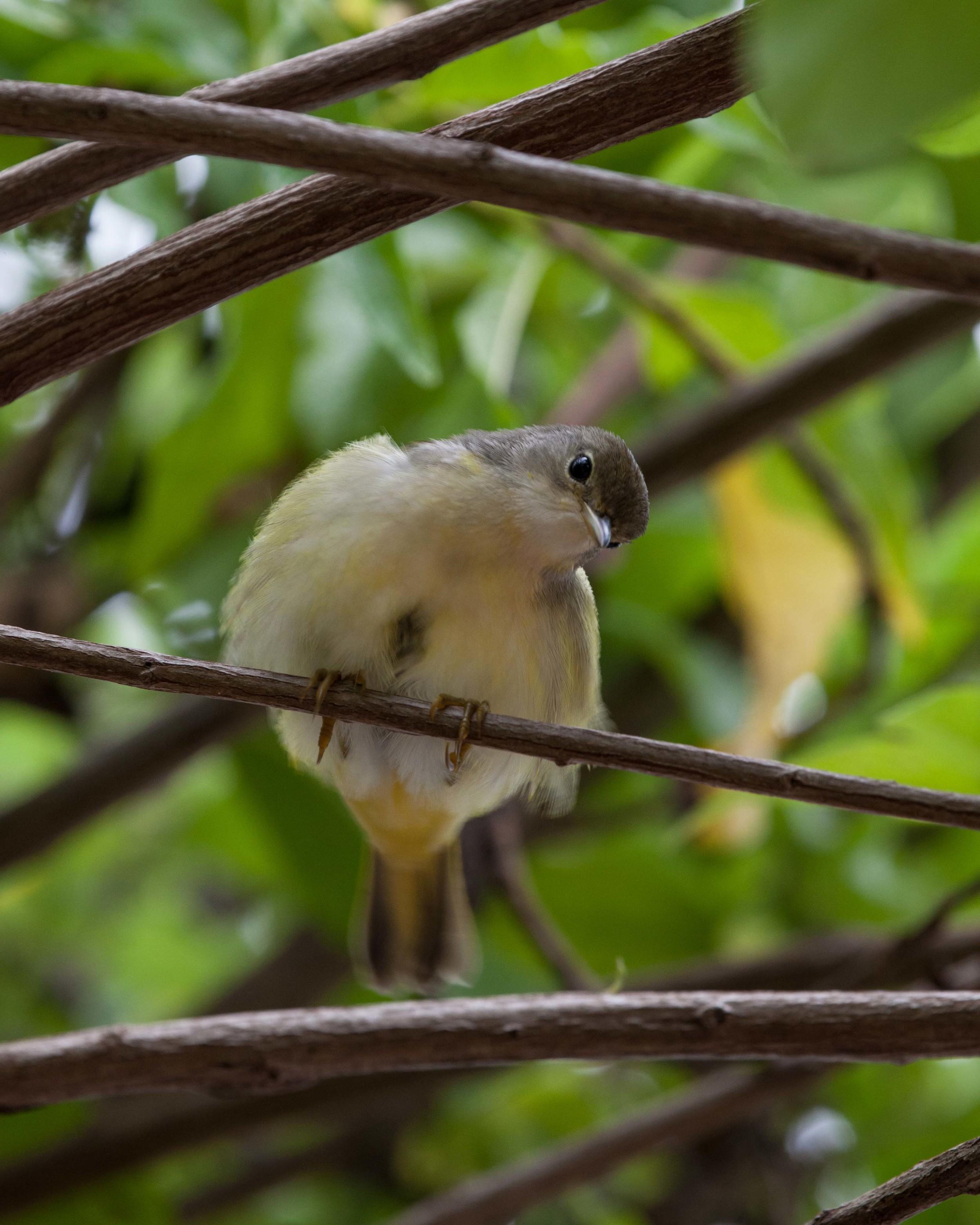 Galapagos_export-17.jpg