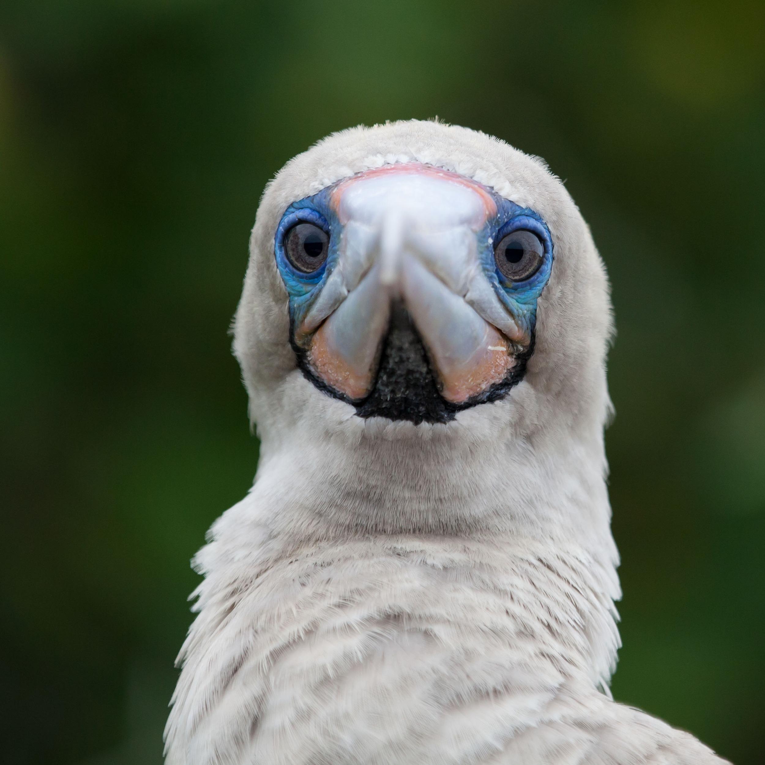 Galapagos_export-24.jpg