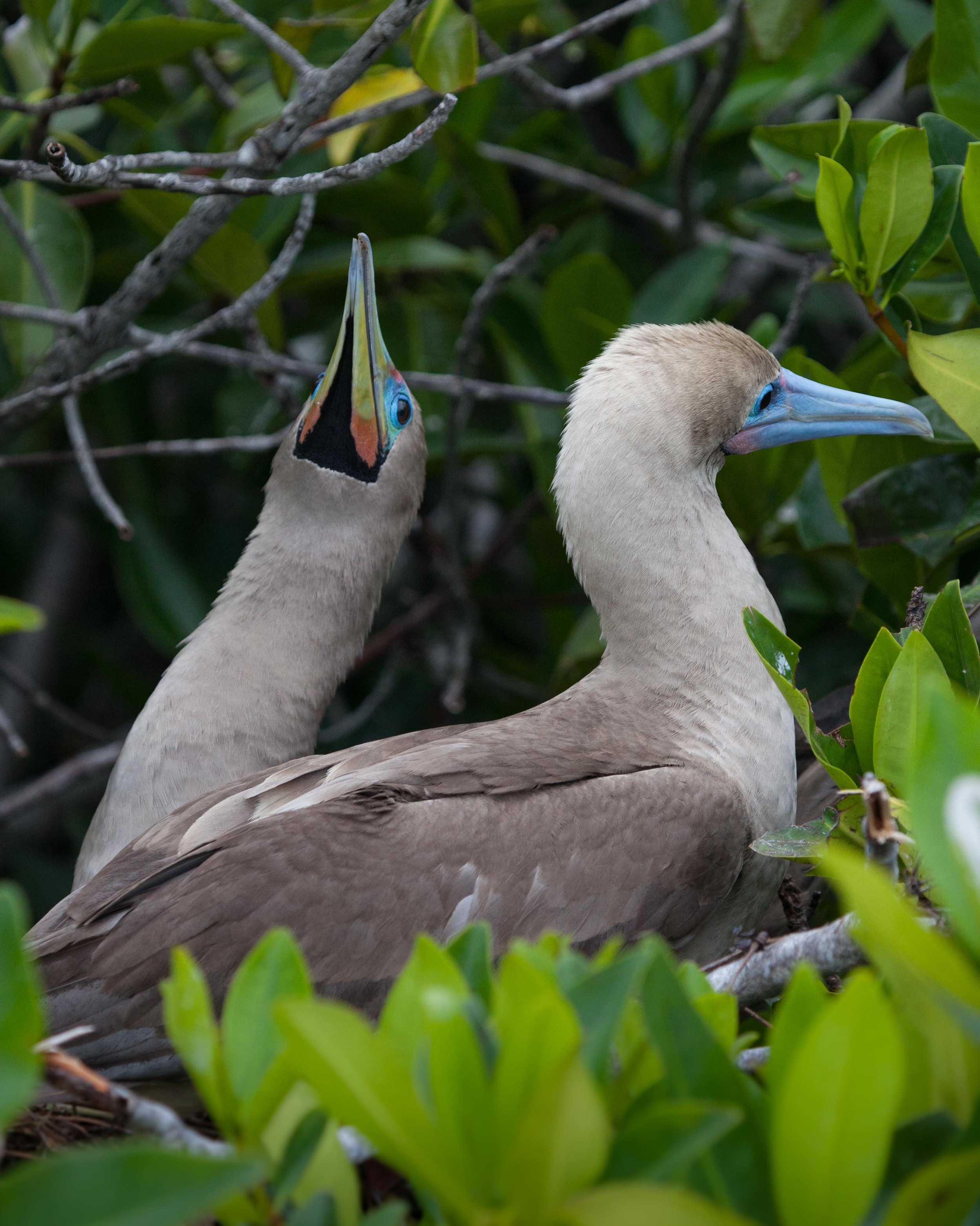 Galapagos_export-27.jpg