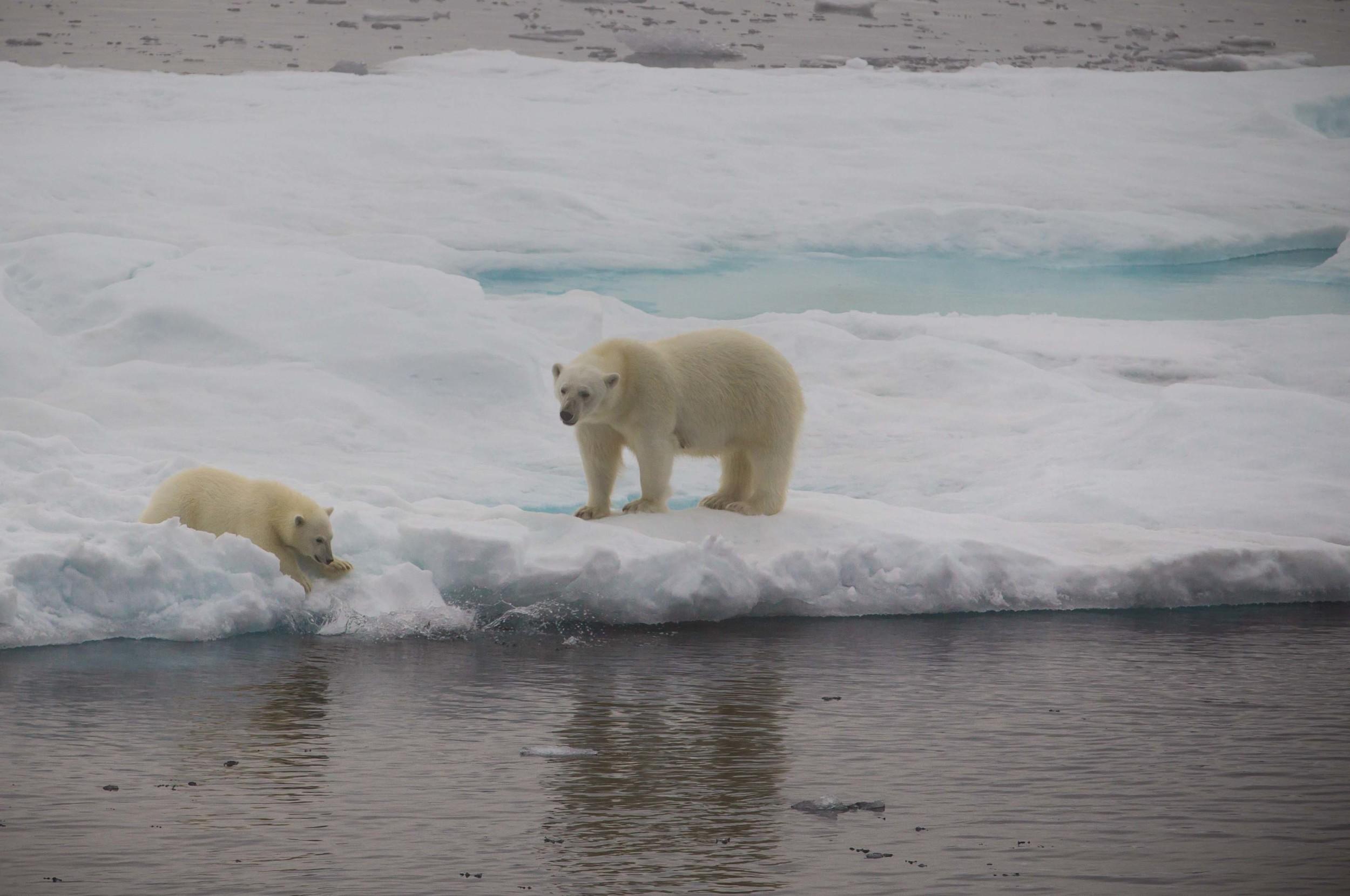 2014-08 Baffin_Island_site-7.jpg
