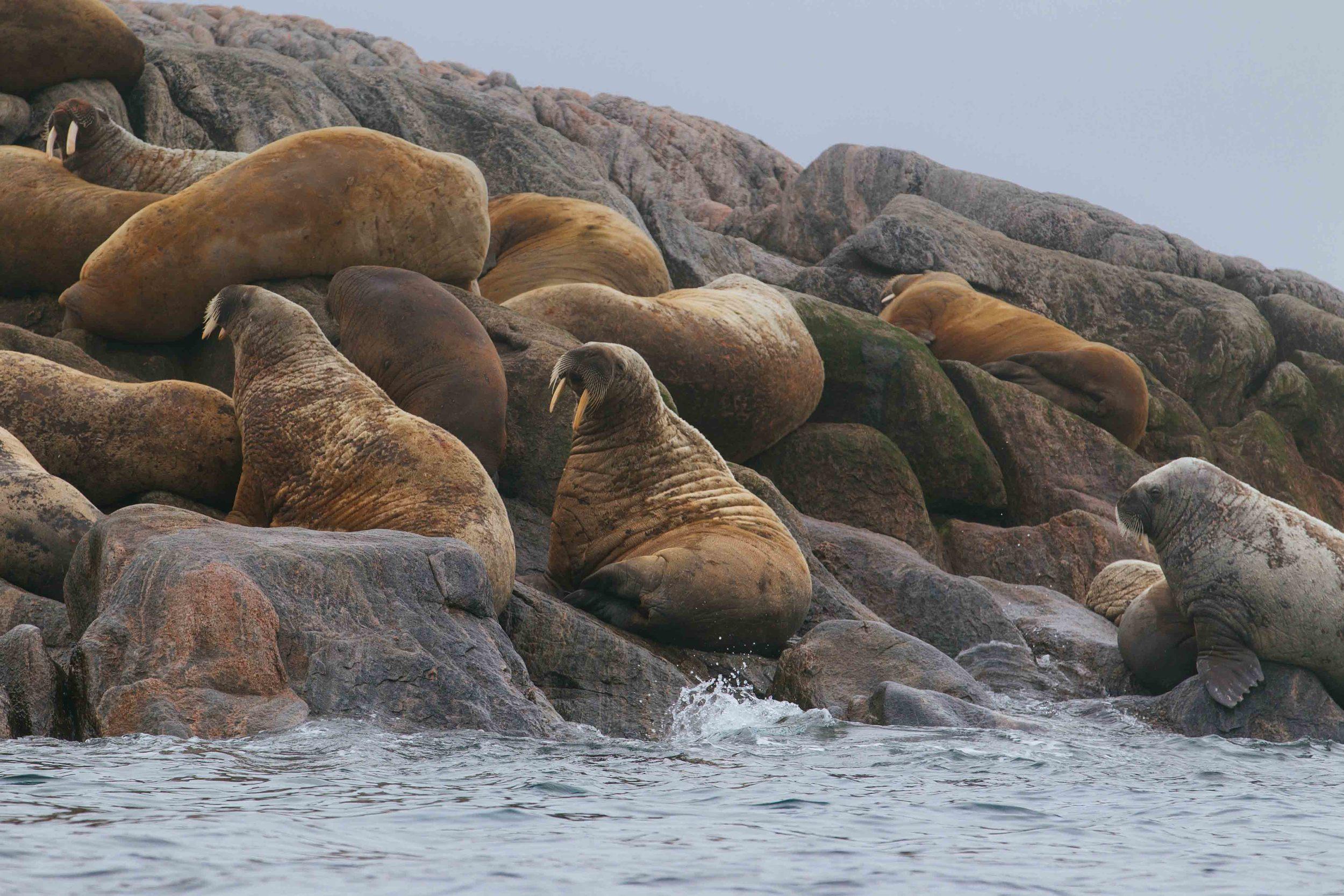 2014-08 Baffin_Island_site_2-4.jpg