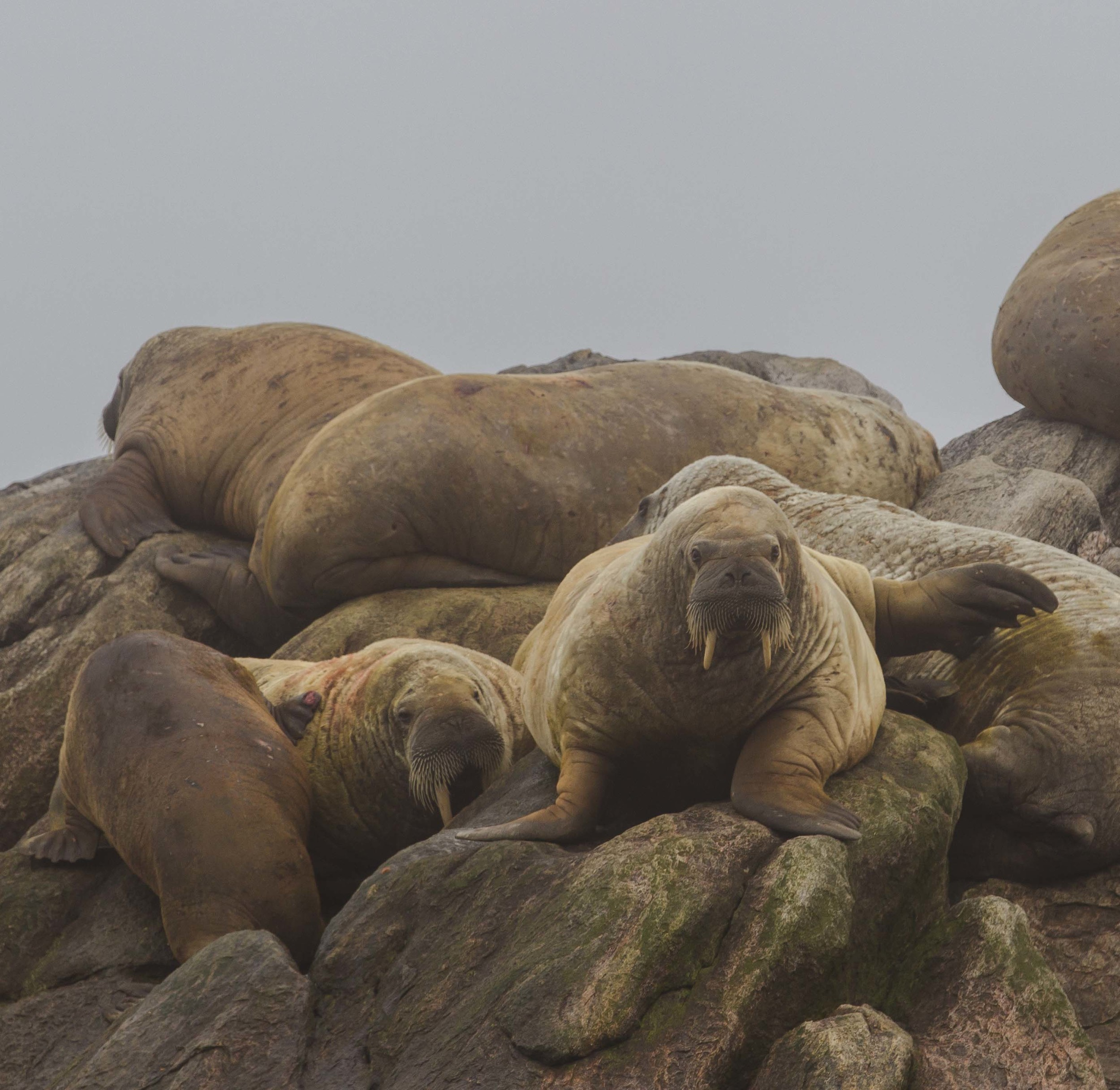 2014-08 Baffin_Island_site-3.jpg