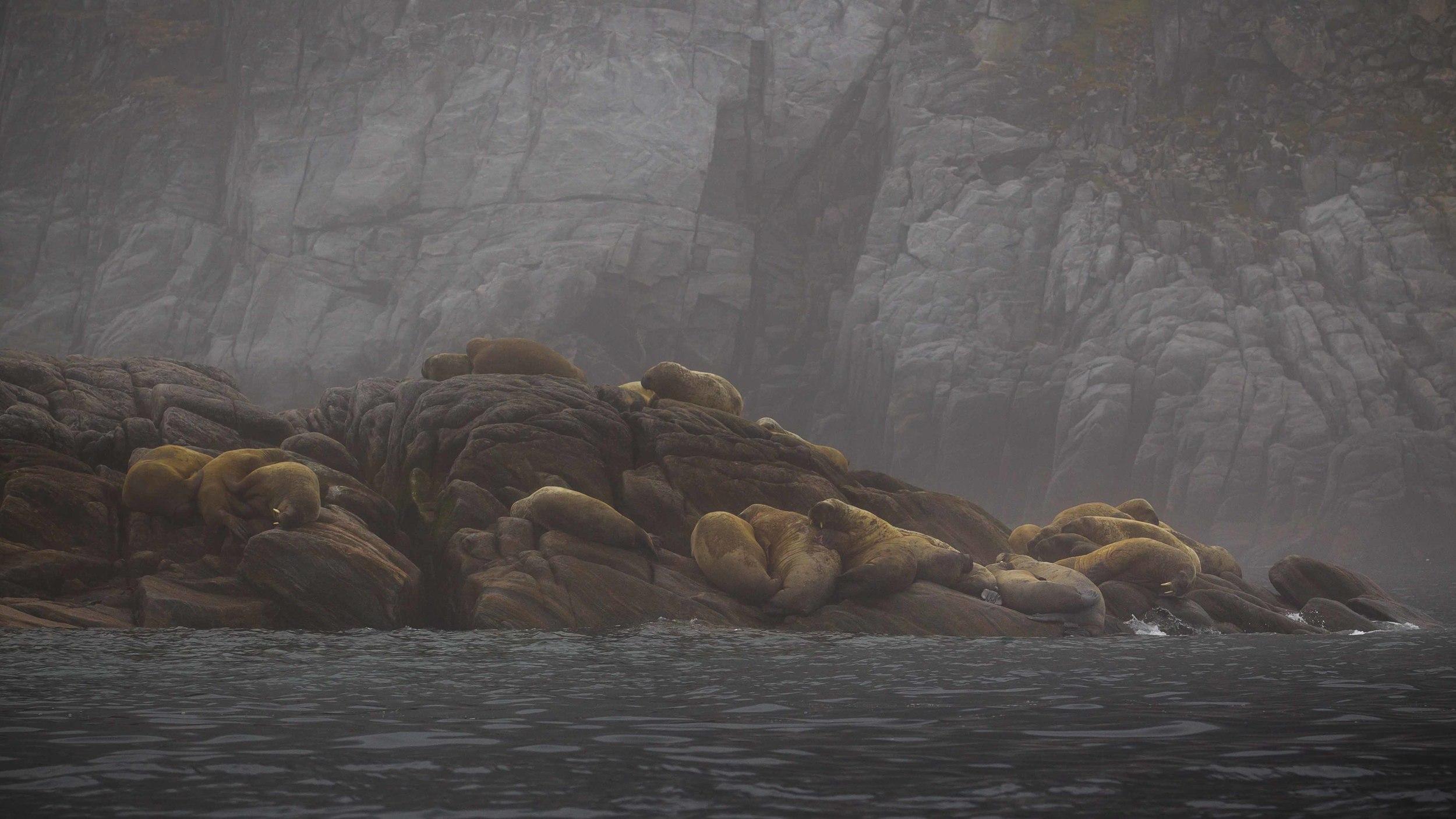 2014-08 Baffin_Island_site-2.jpg