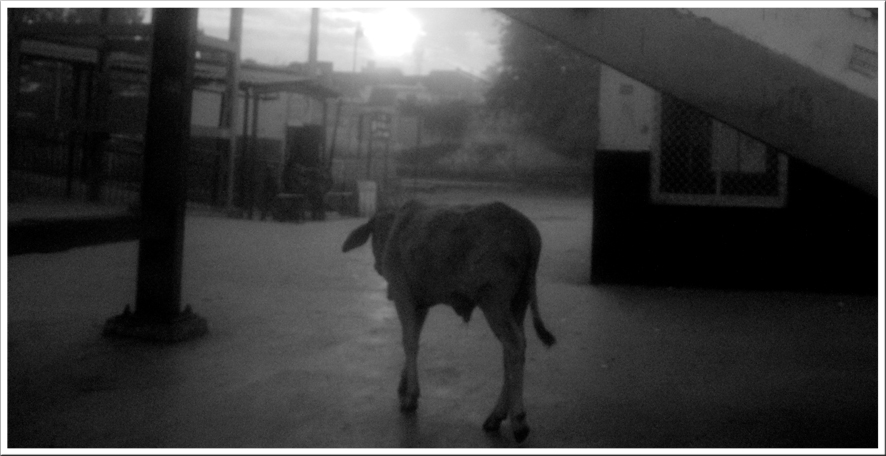 15_train-pictures-delhi-jaipur-long-format-12.jpg