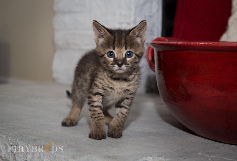 kopi-kitten-5litter-25.jpg
