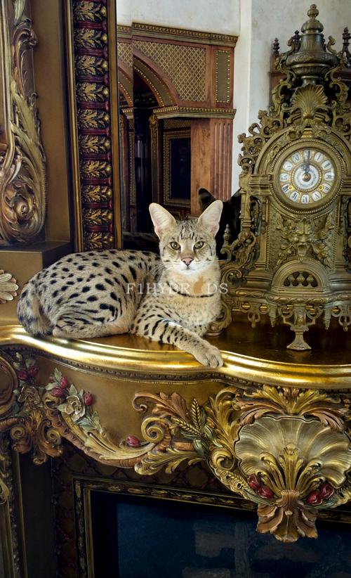 past-kittens-17.jpg