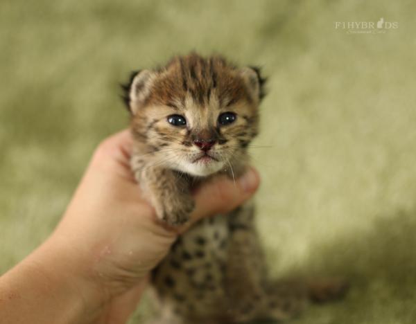 f2-kittens-7.jpg
