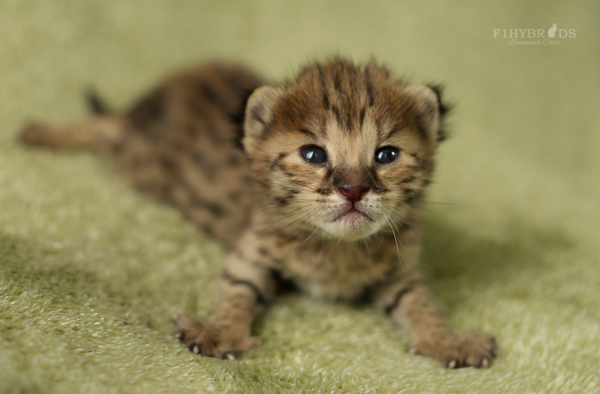 f2-kittens-12.jpg