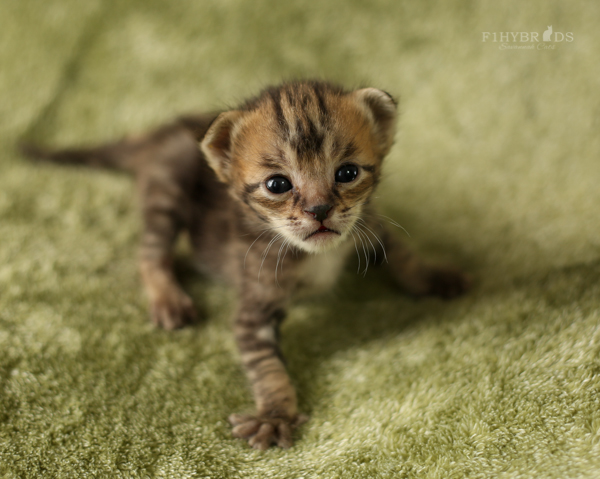 f2-kittens-14.jpg