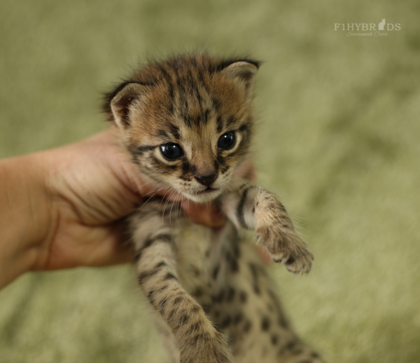 f2-kittens-18.jpg
