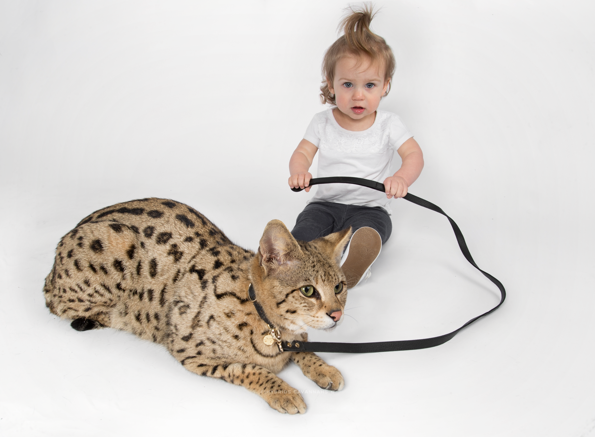 Eva & Omi - F1 Savannah Cat