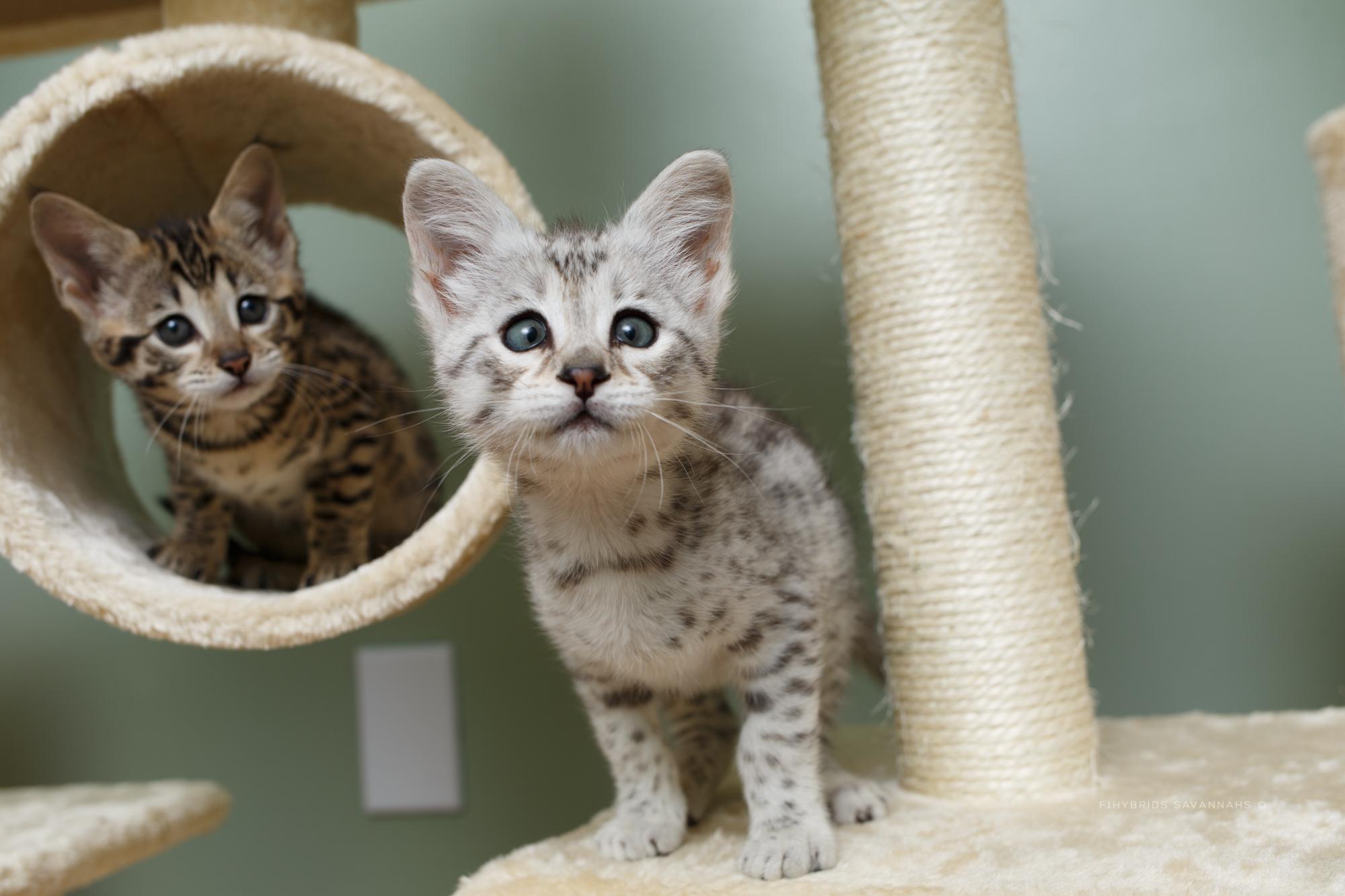 5.6.kittens-54.JPG