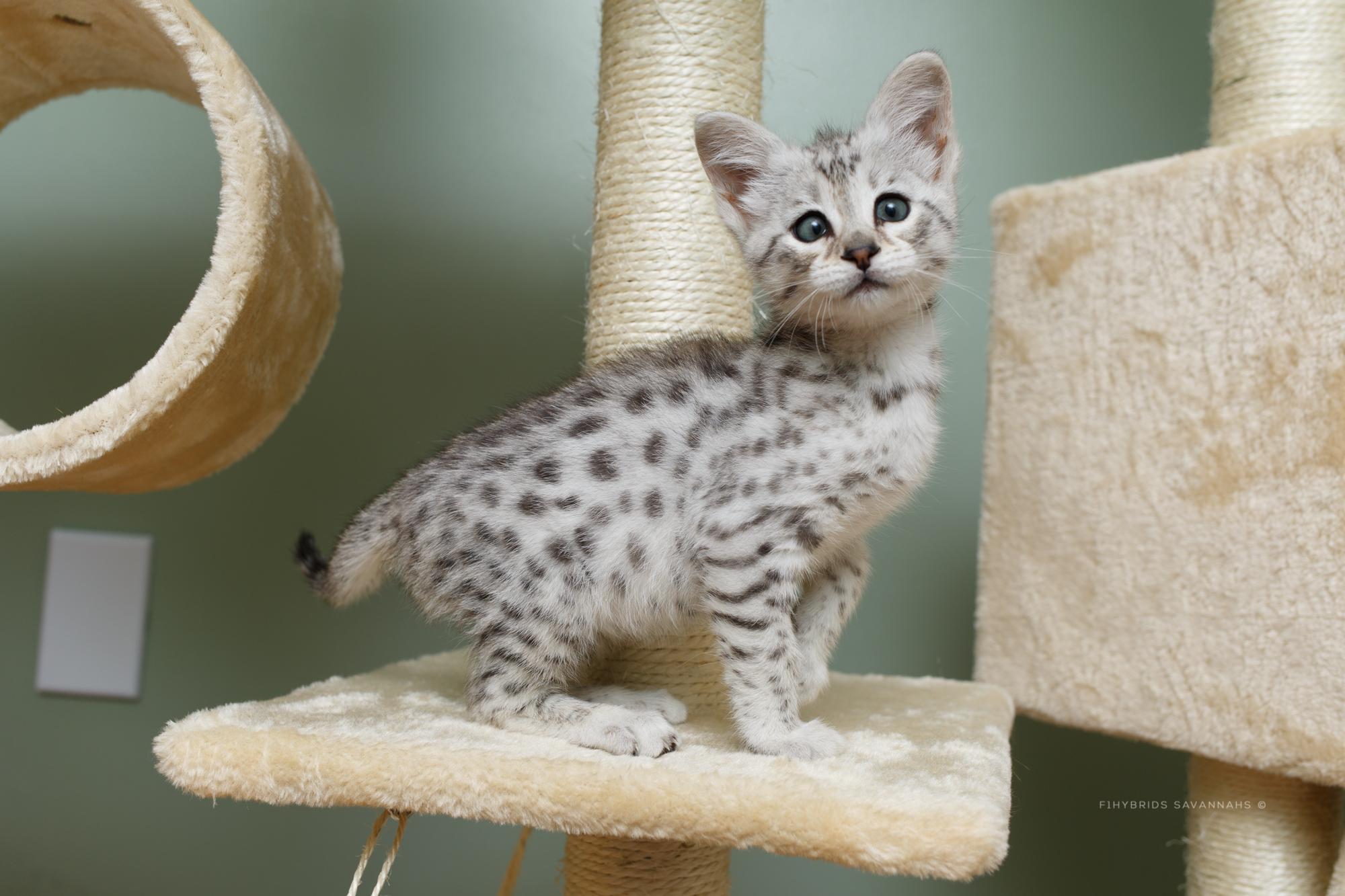 5.6.kittens-55.JPG