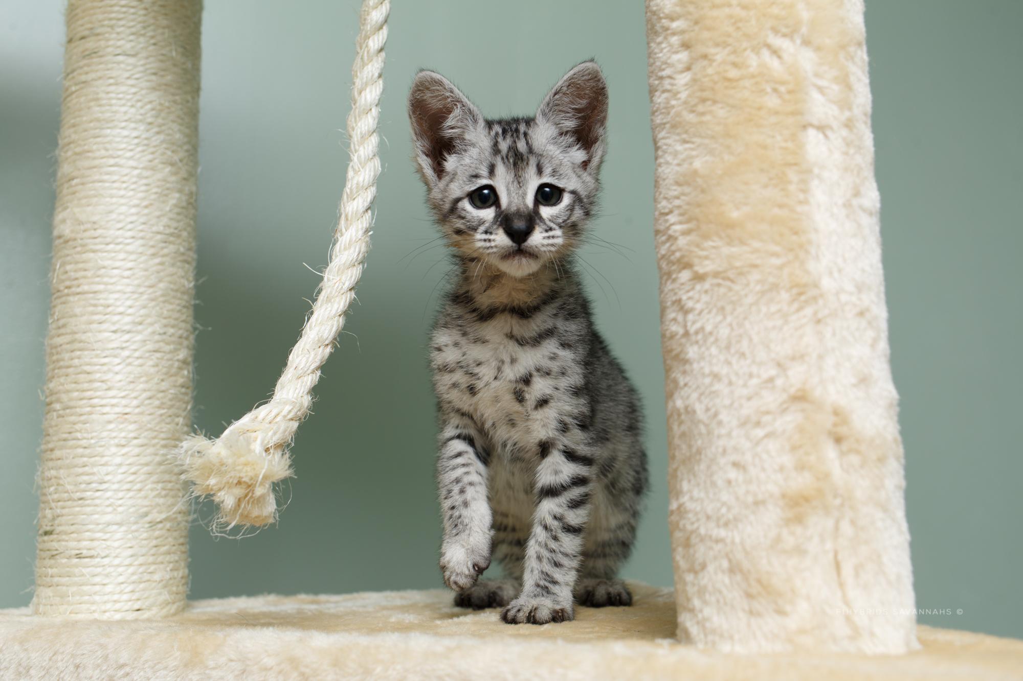 5.6.kittens-63.JPG