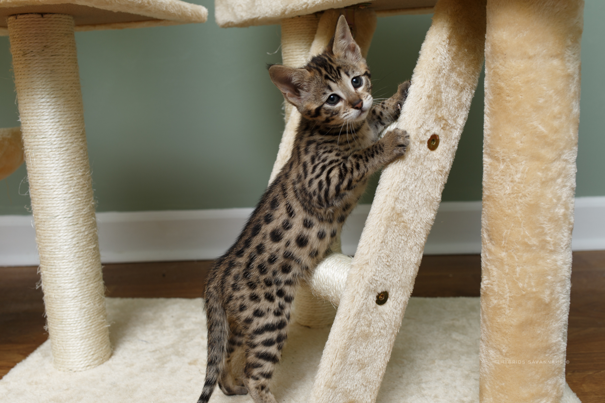 5.6.kittens-62.JPG