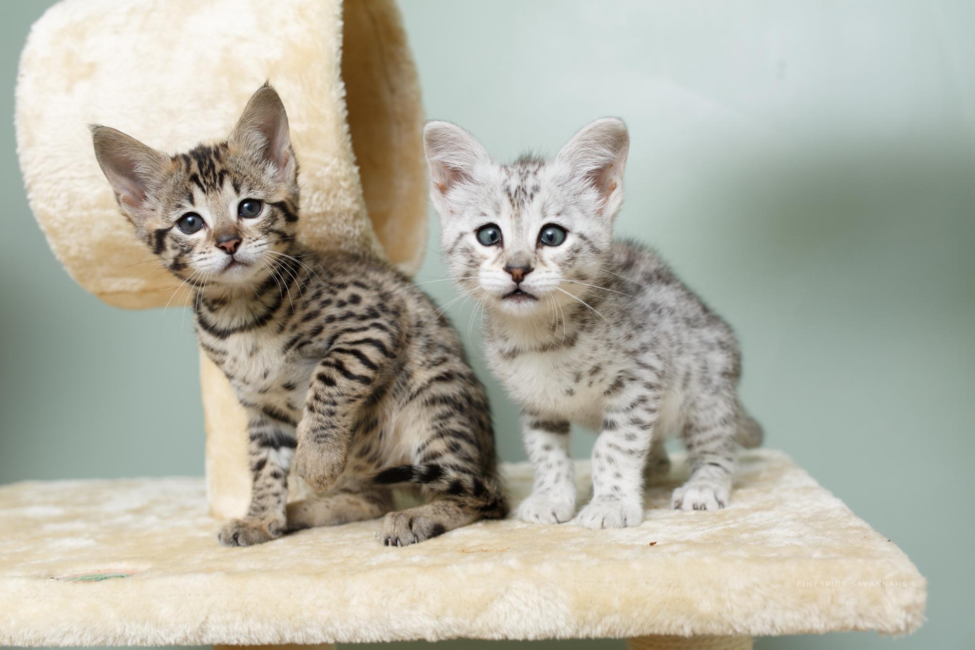 5.6.kittens-50.JPG