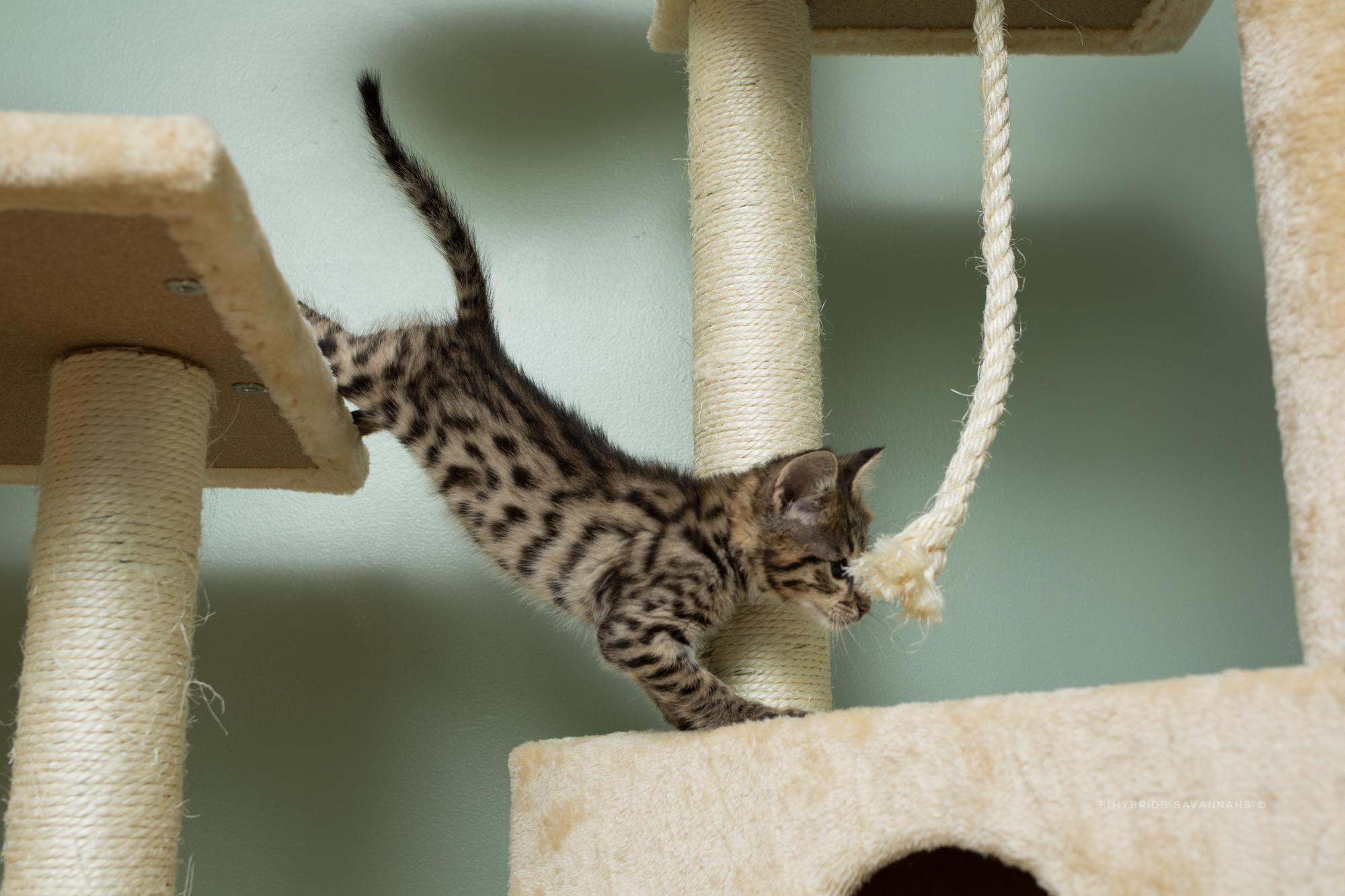 5.6.kittens-69.JPG