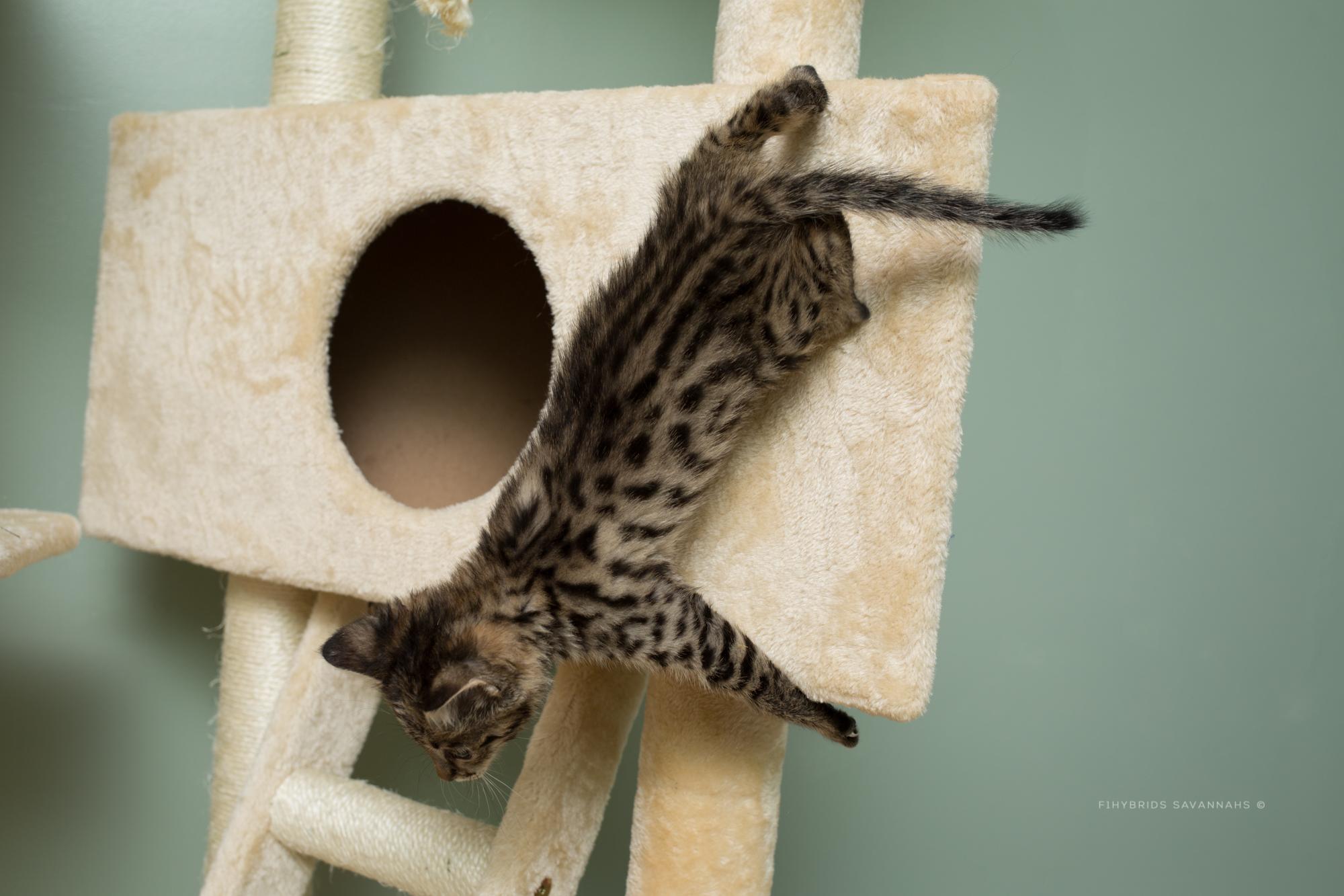 5.6.kittens-70.JPG