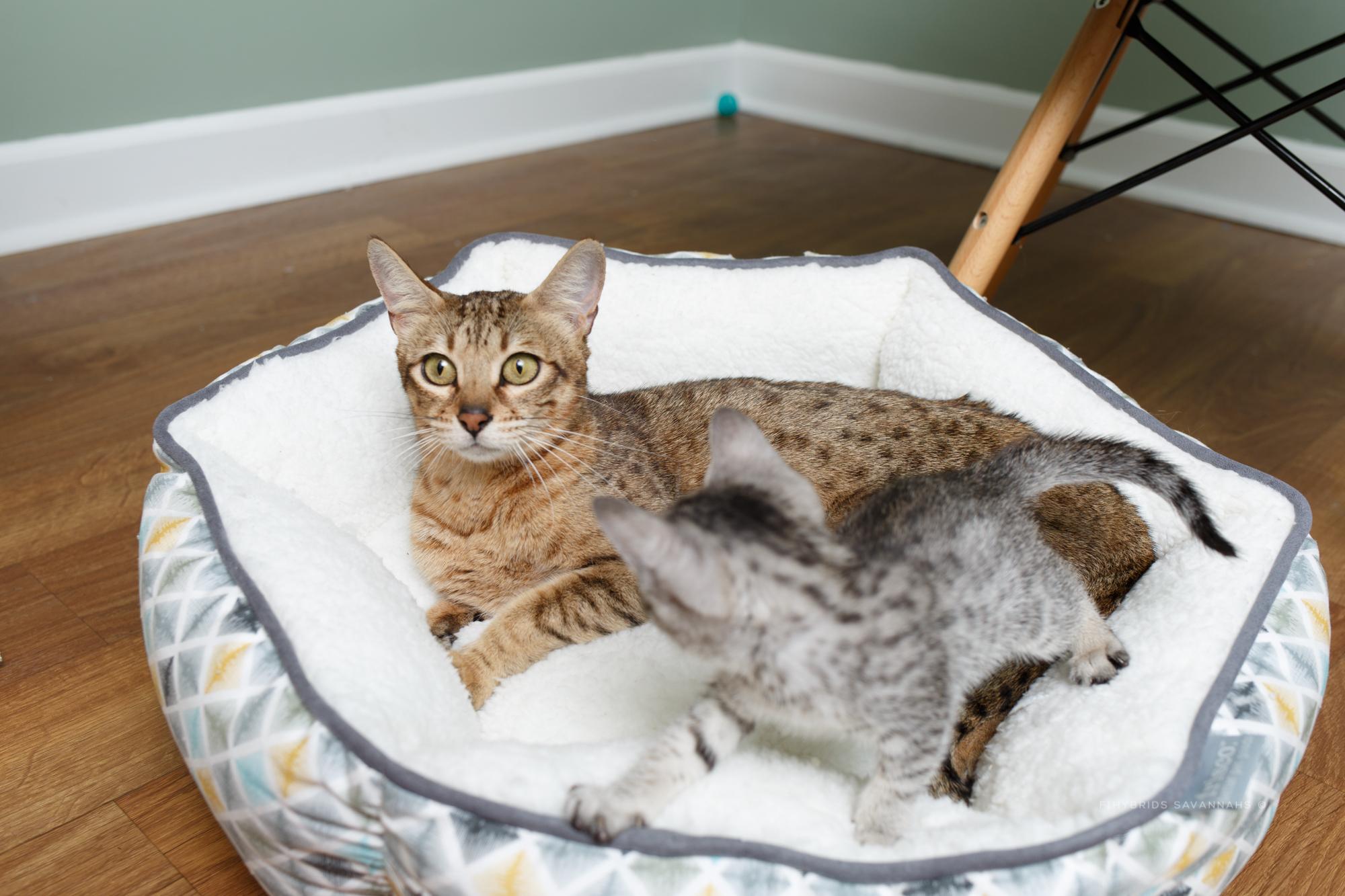 5.6.kittens-46.JPG