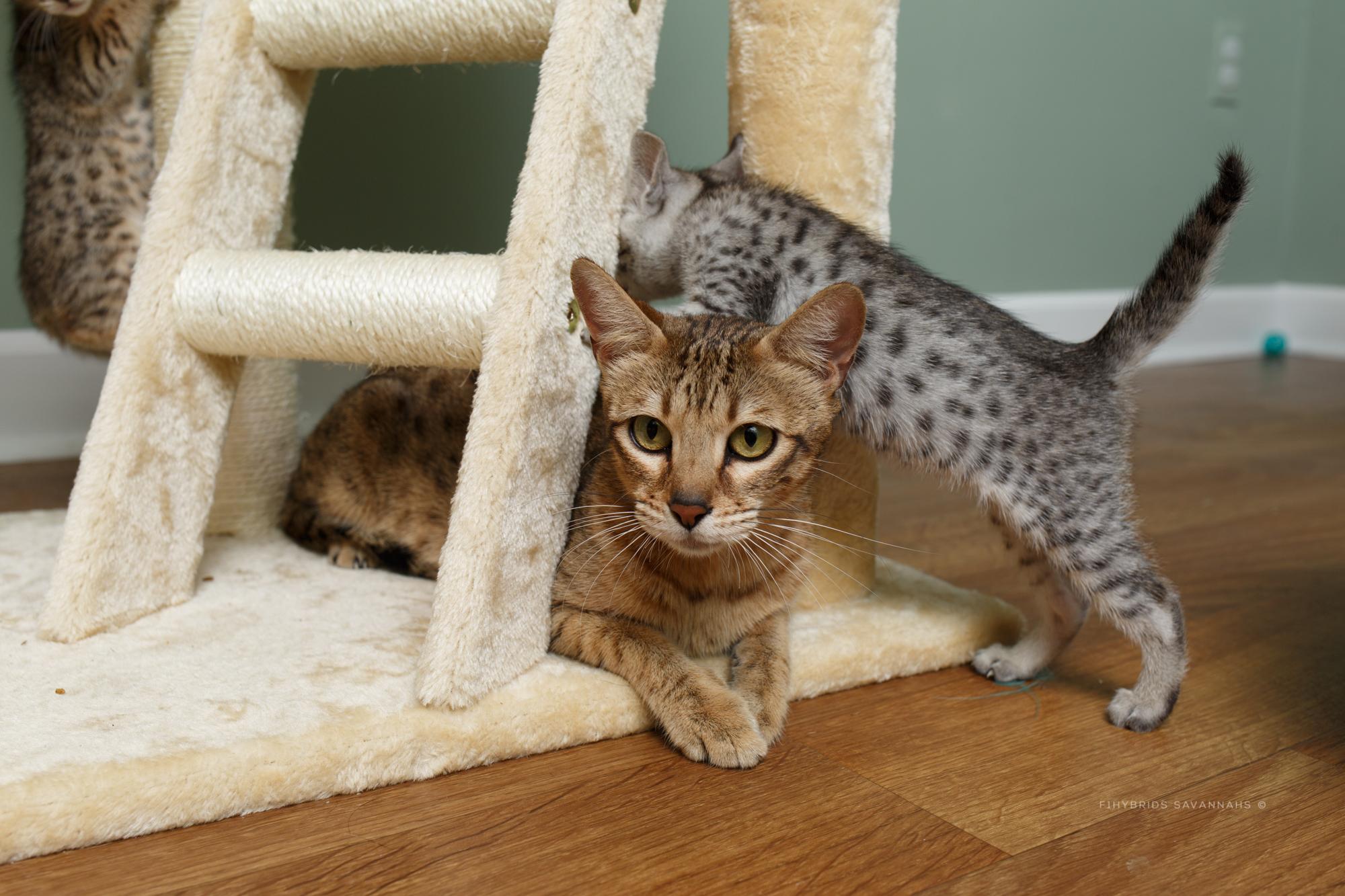 5.6.kittens-39.JPG